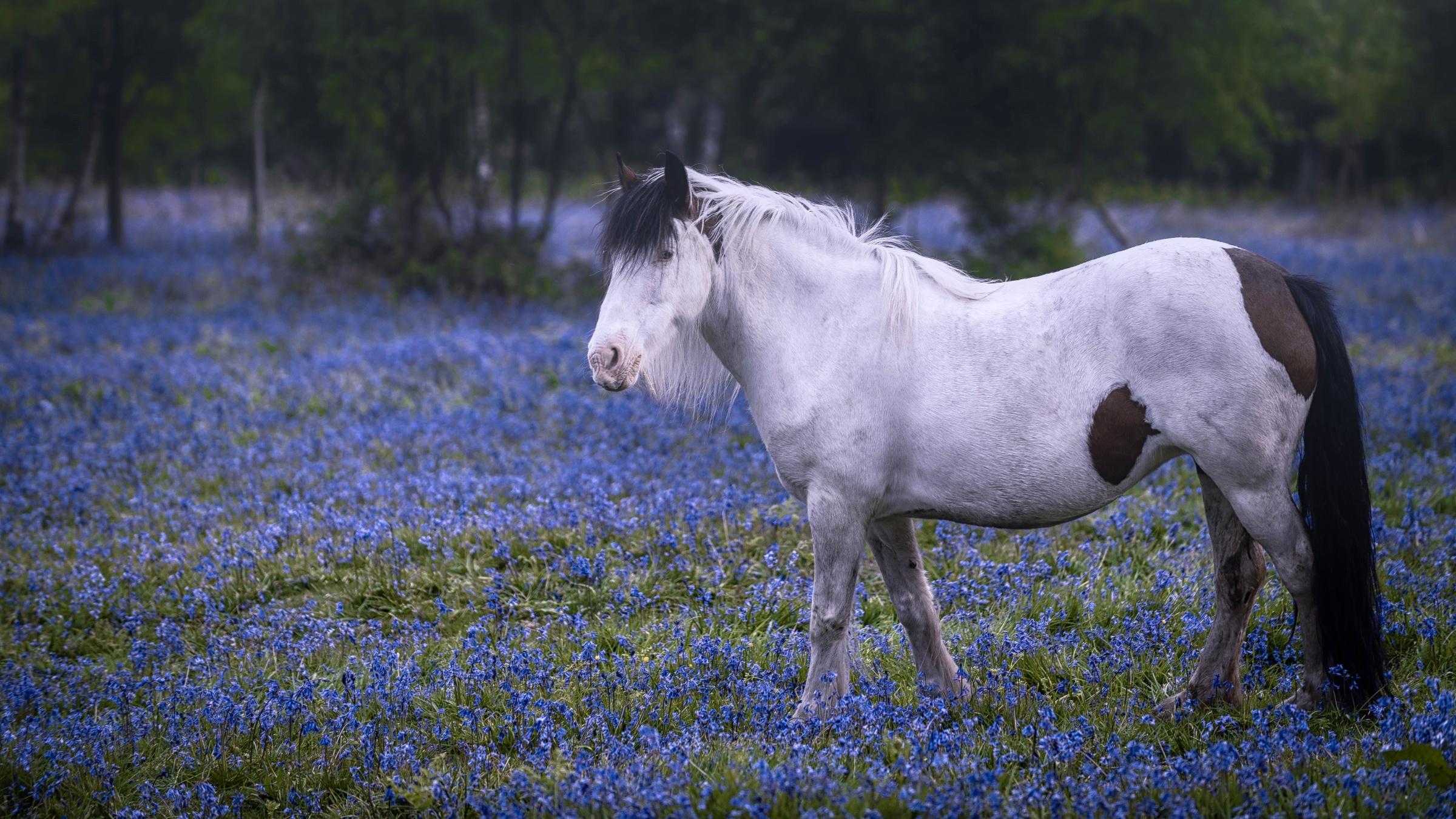 Blue Flower Horse 2400x1350
