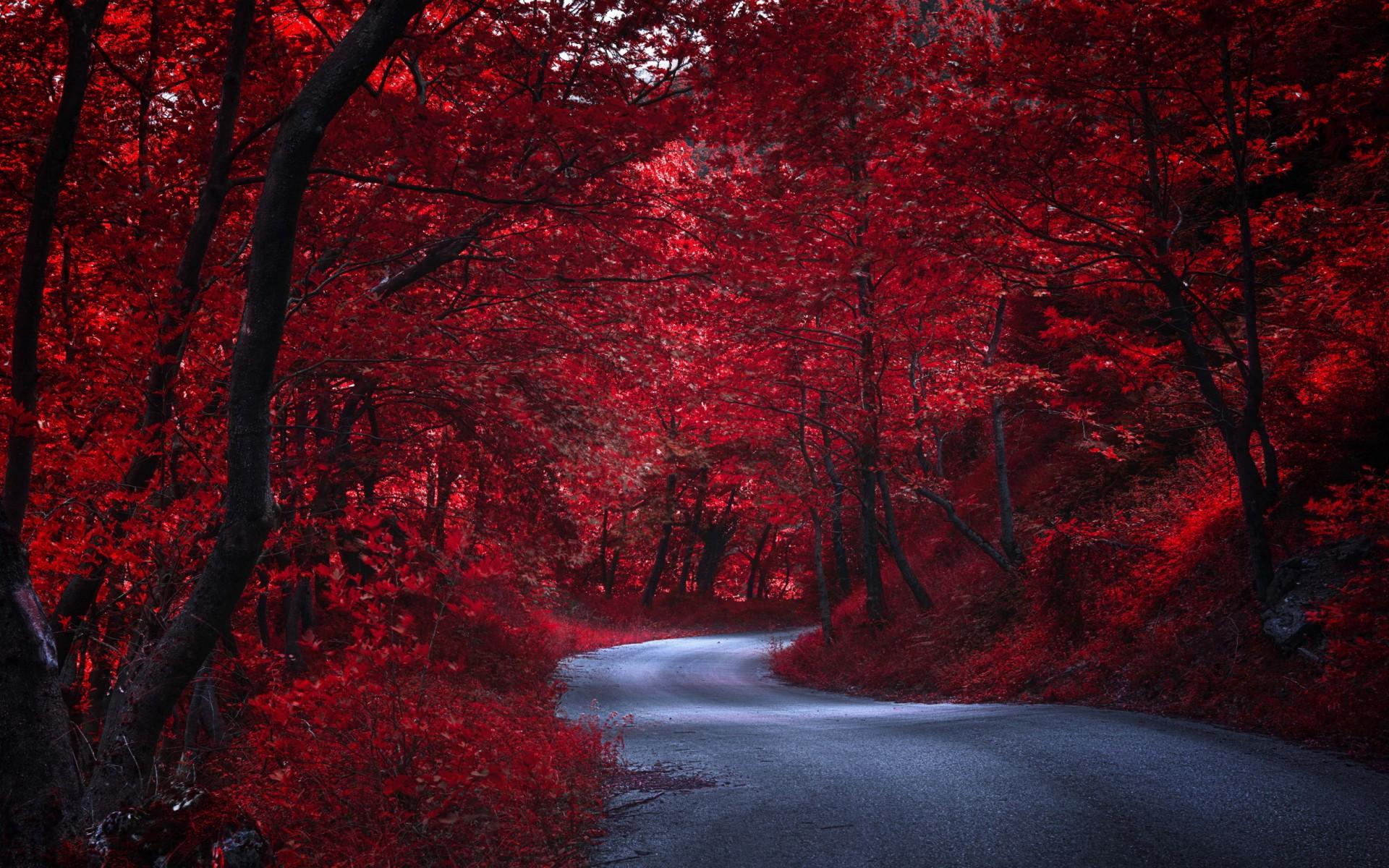 Nature Red Tree 1920x1200