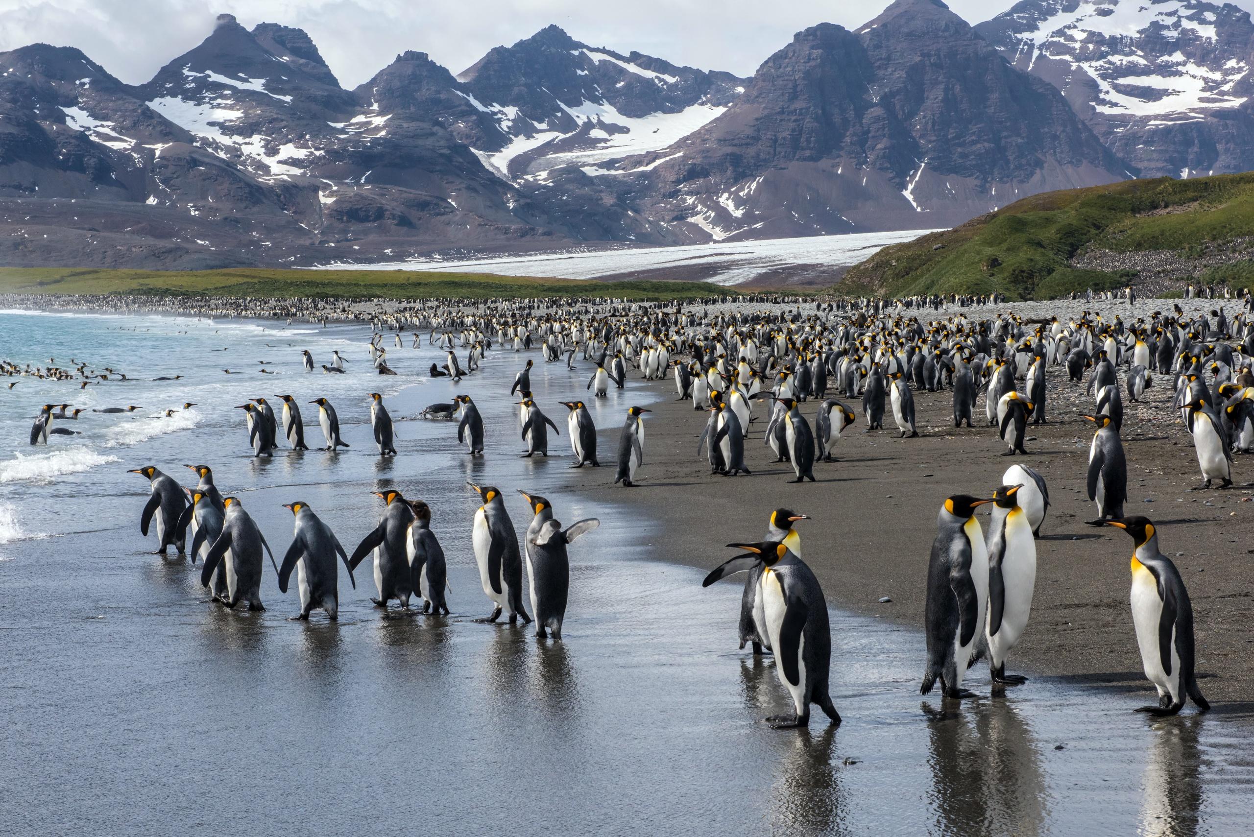 Penguin Wildlife 2560x1709