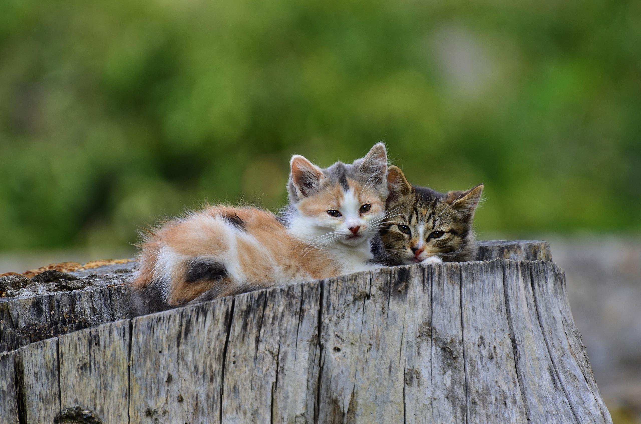 Baby Animal Cat Kitten Pet 2560x1696