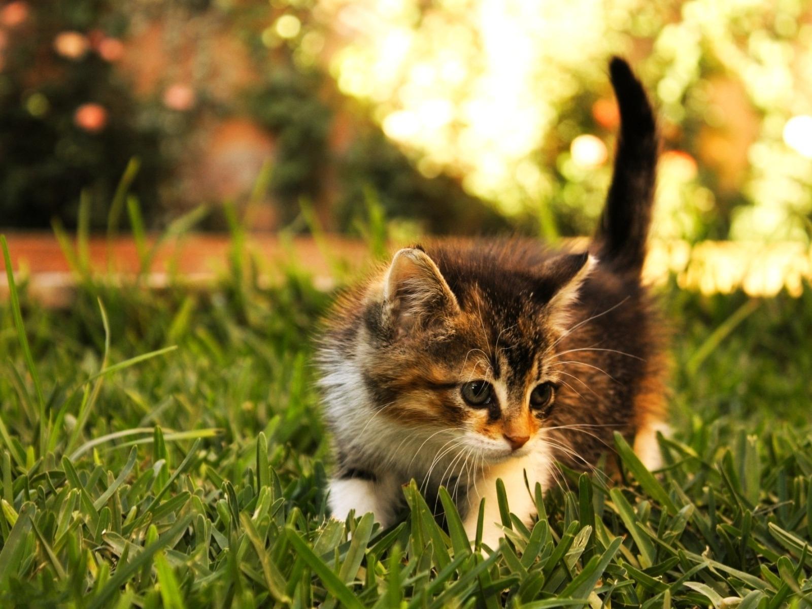 Animal Cat 1600x1200