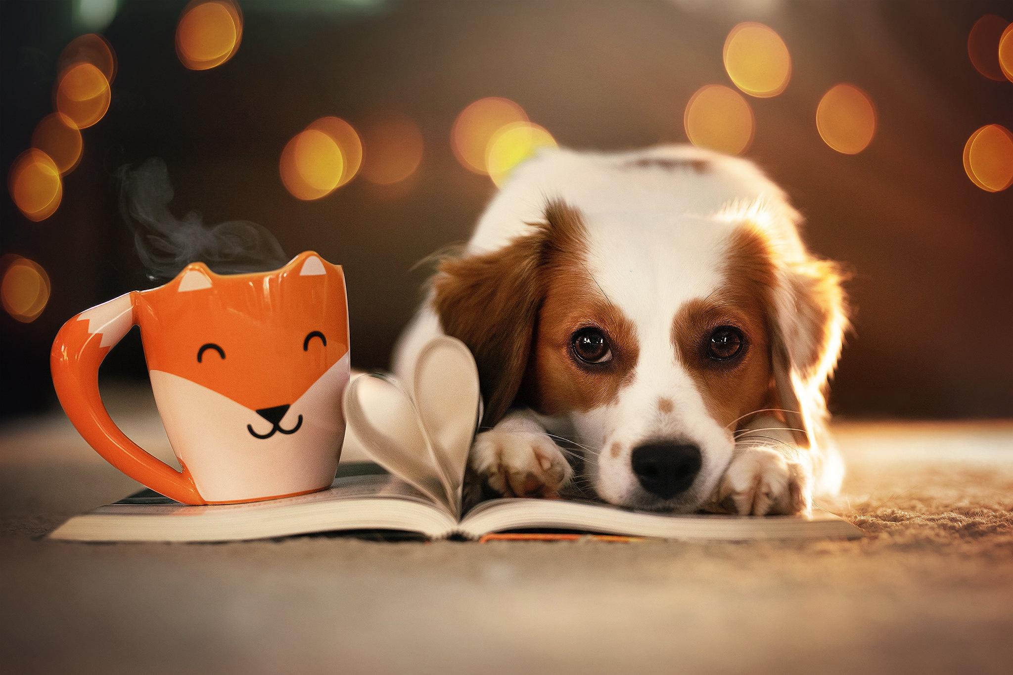 Bokeh Cup Dog Pet 2048x1365