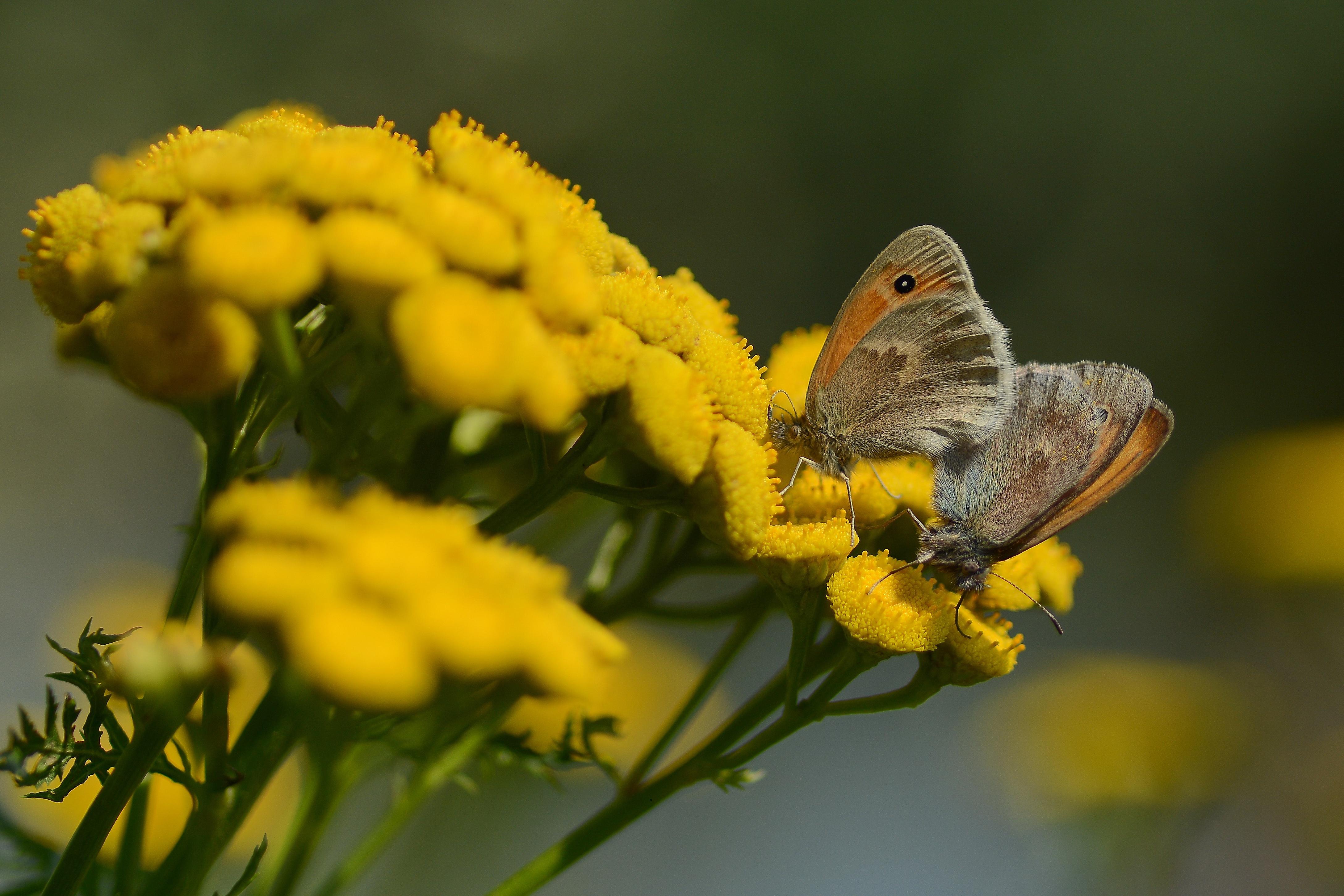 Butterfly Flower 4353x2902