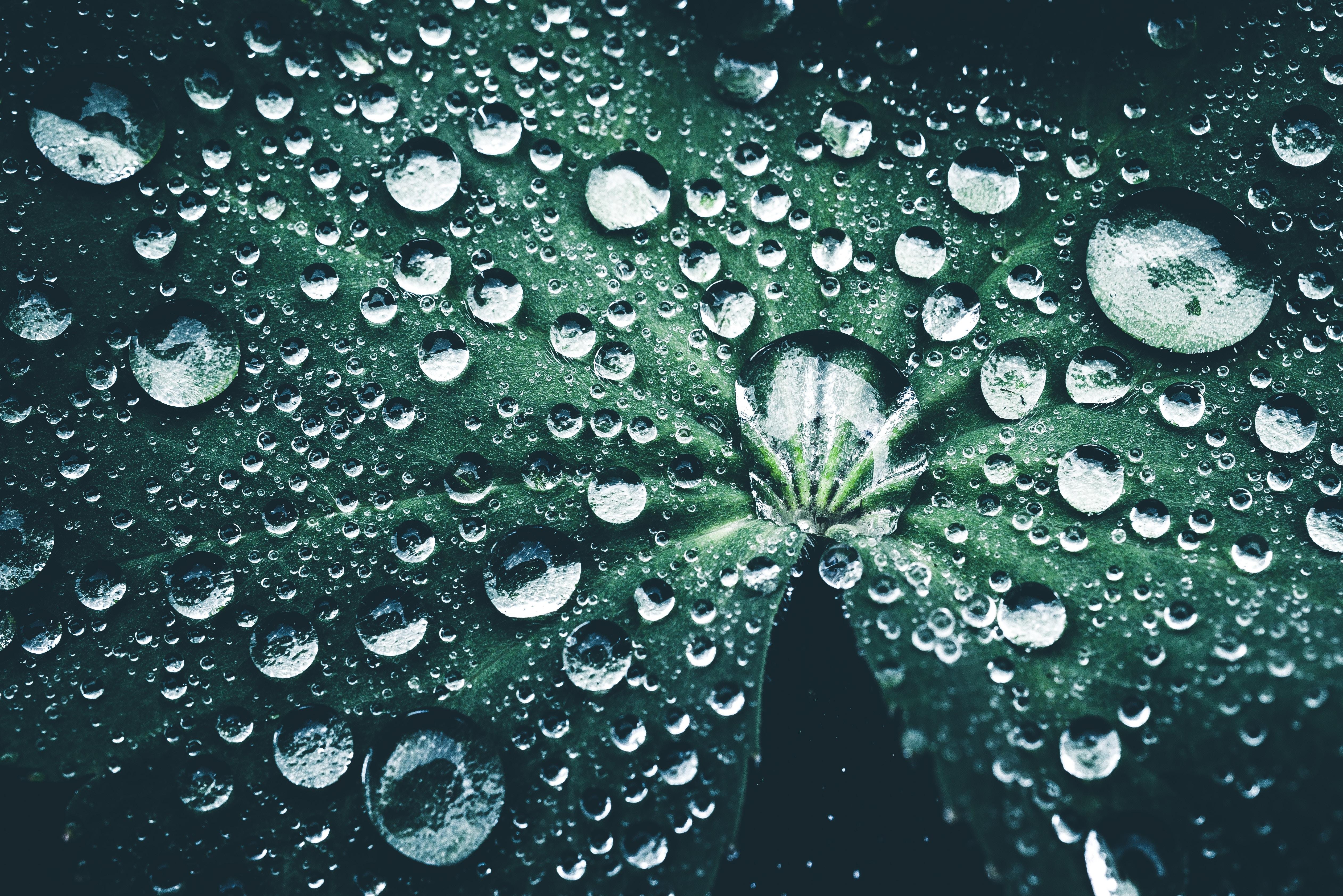 Leaf Macro Nature Water Drop 5046x3368