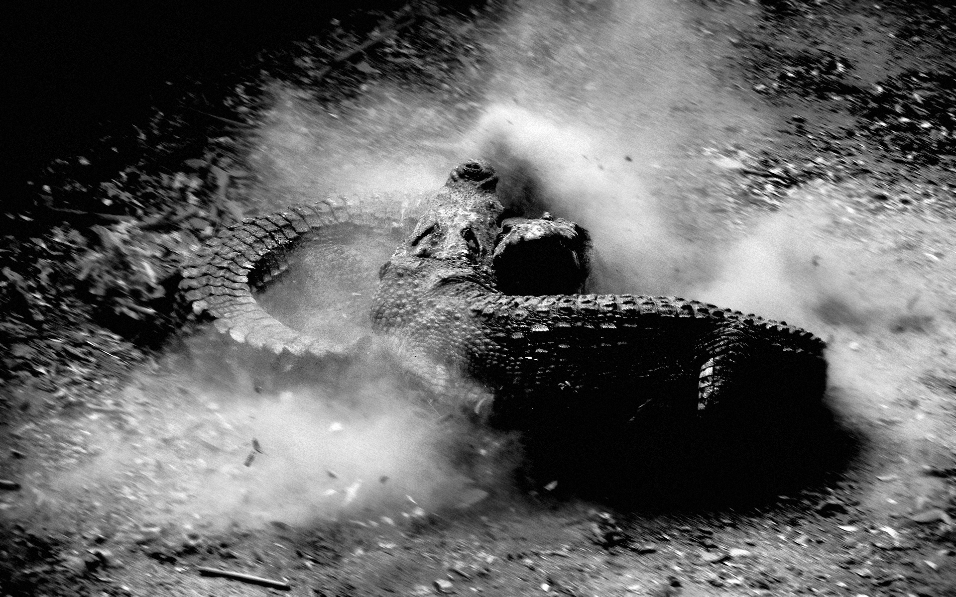 Animal Crocodile 1920x1200