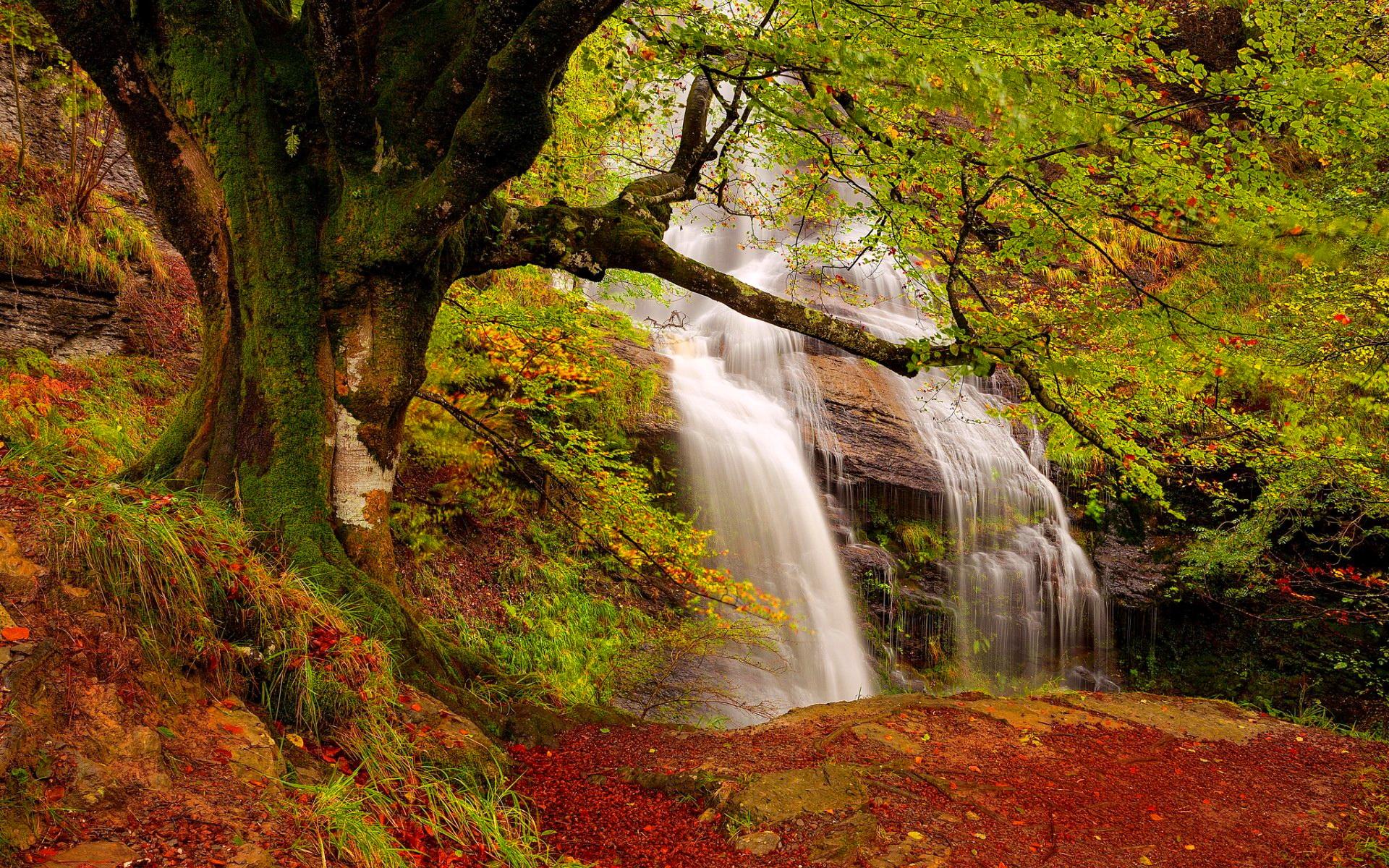 Fall Waterfall 1920x1200