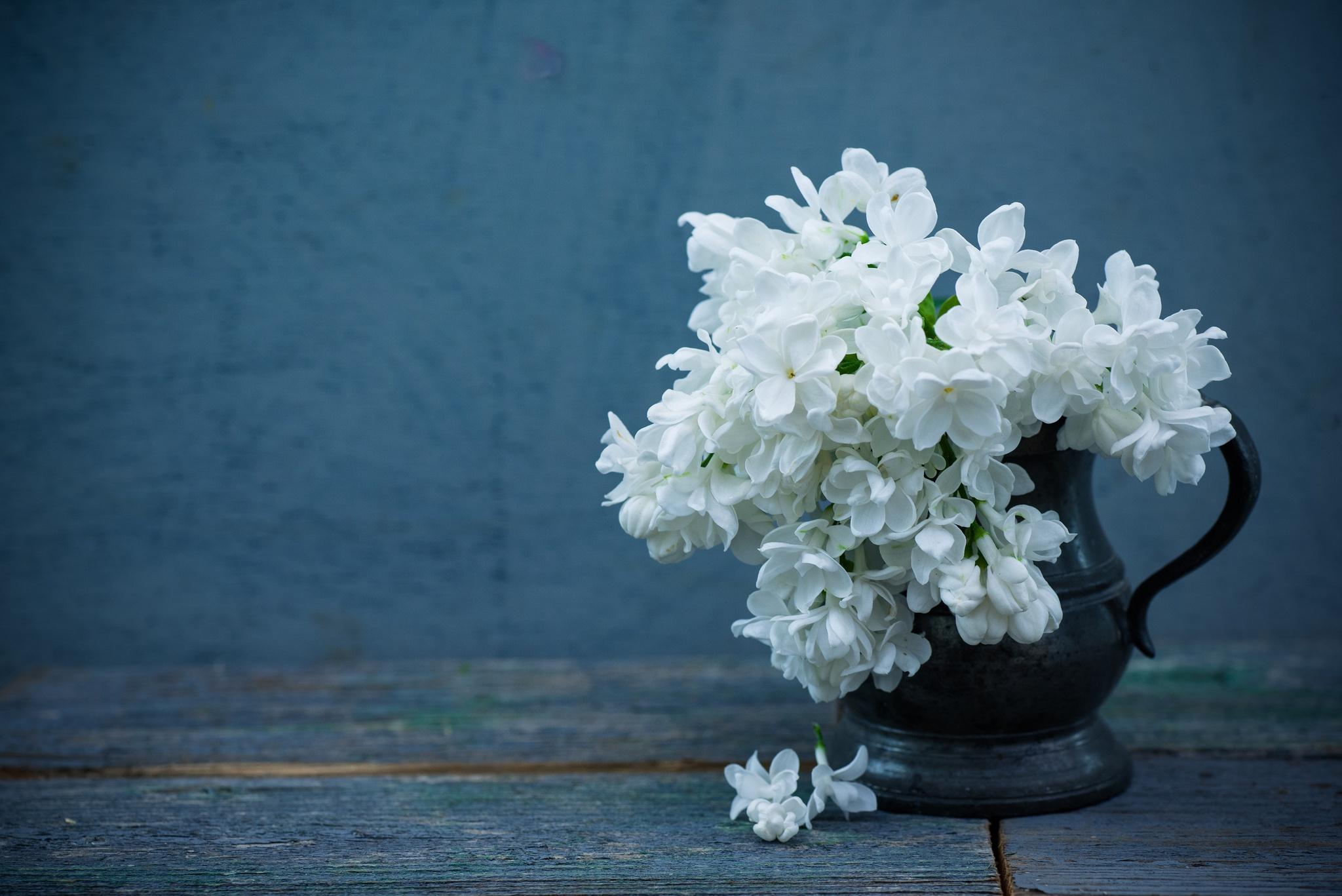 Jug Lilac Petal White Flower 2048x1367