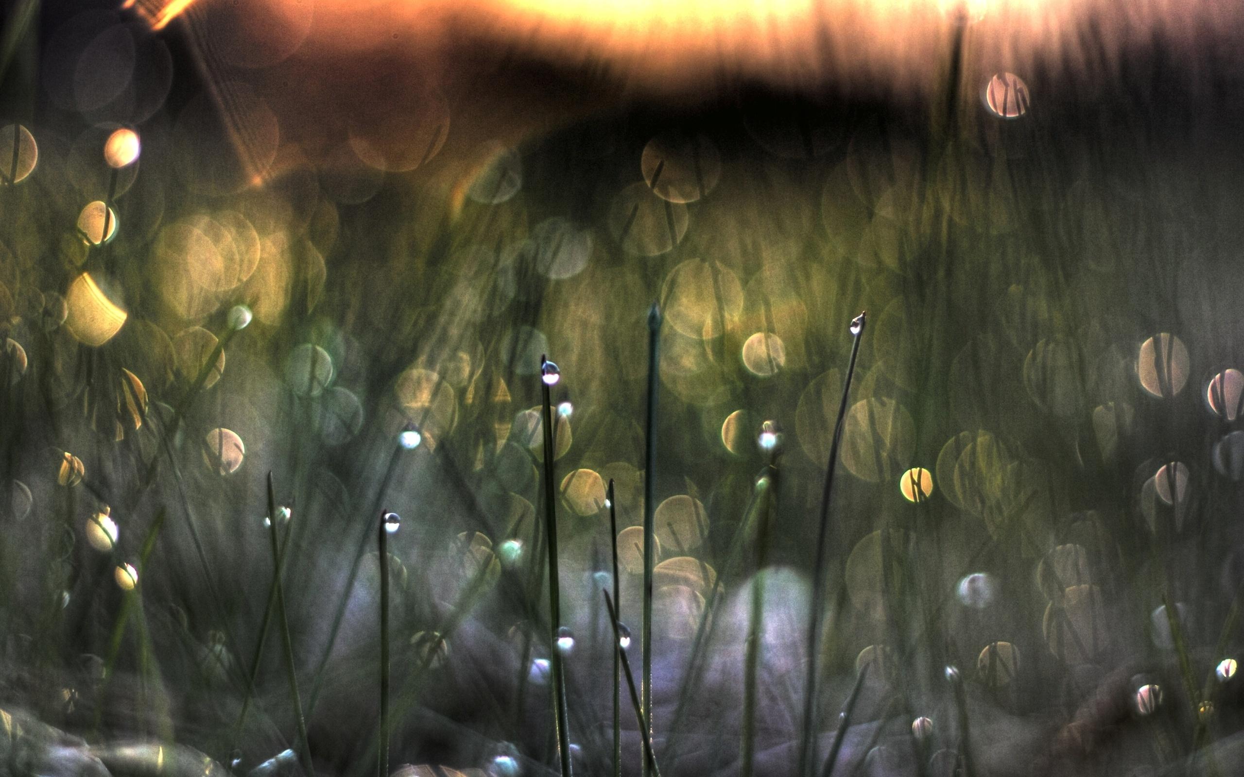 Earth Grass 2560x1600