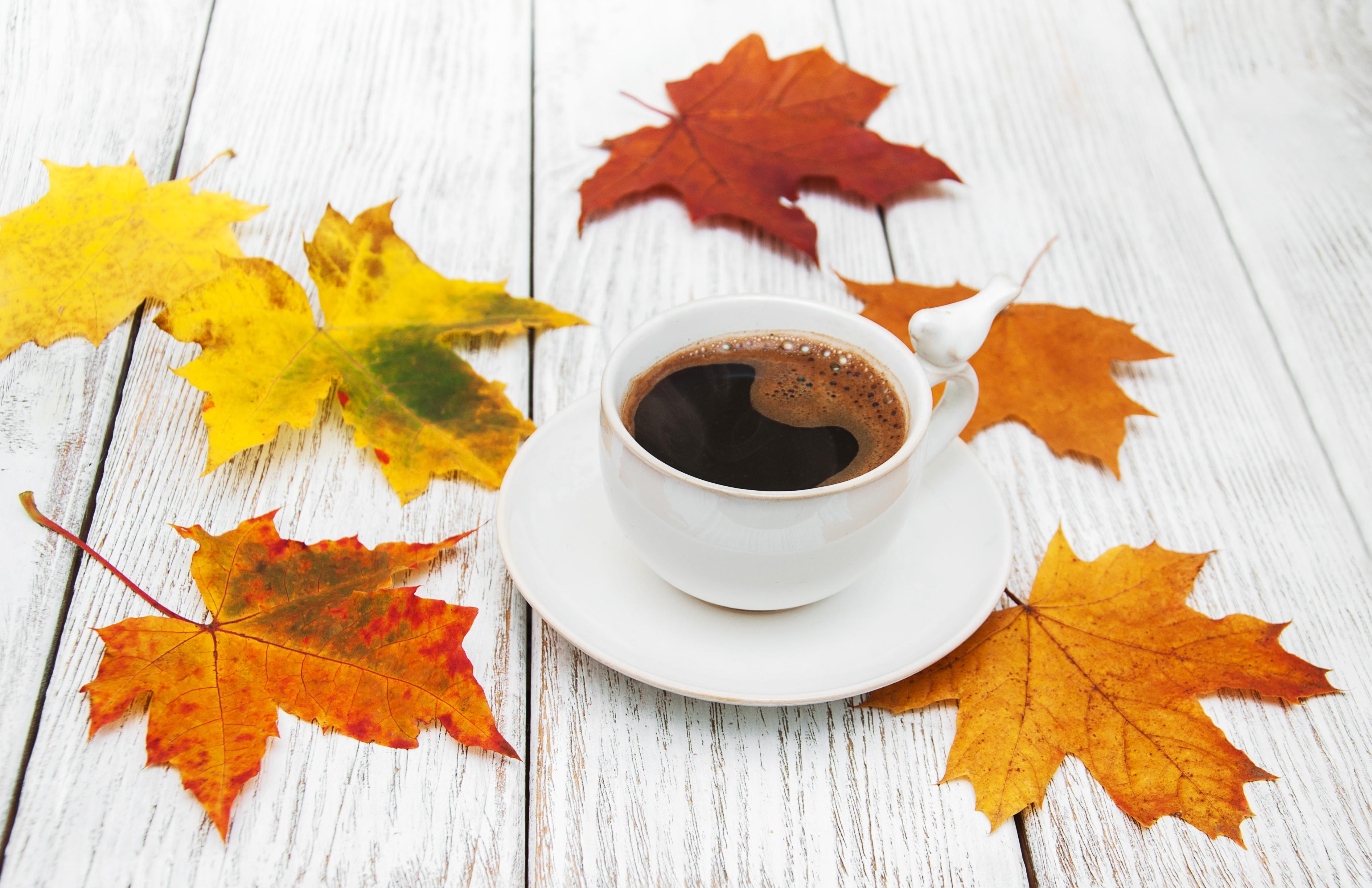 Coffee Cup Drink Leaf 3782x2447