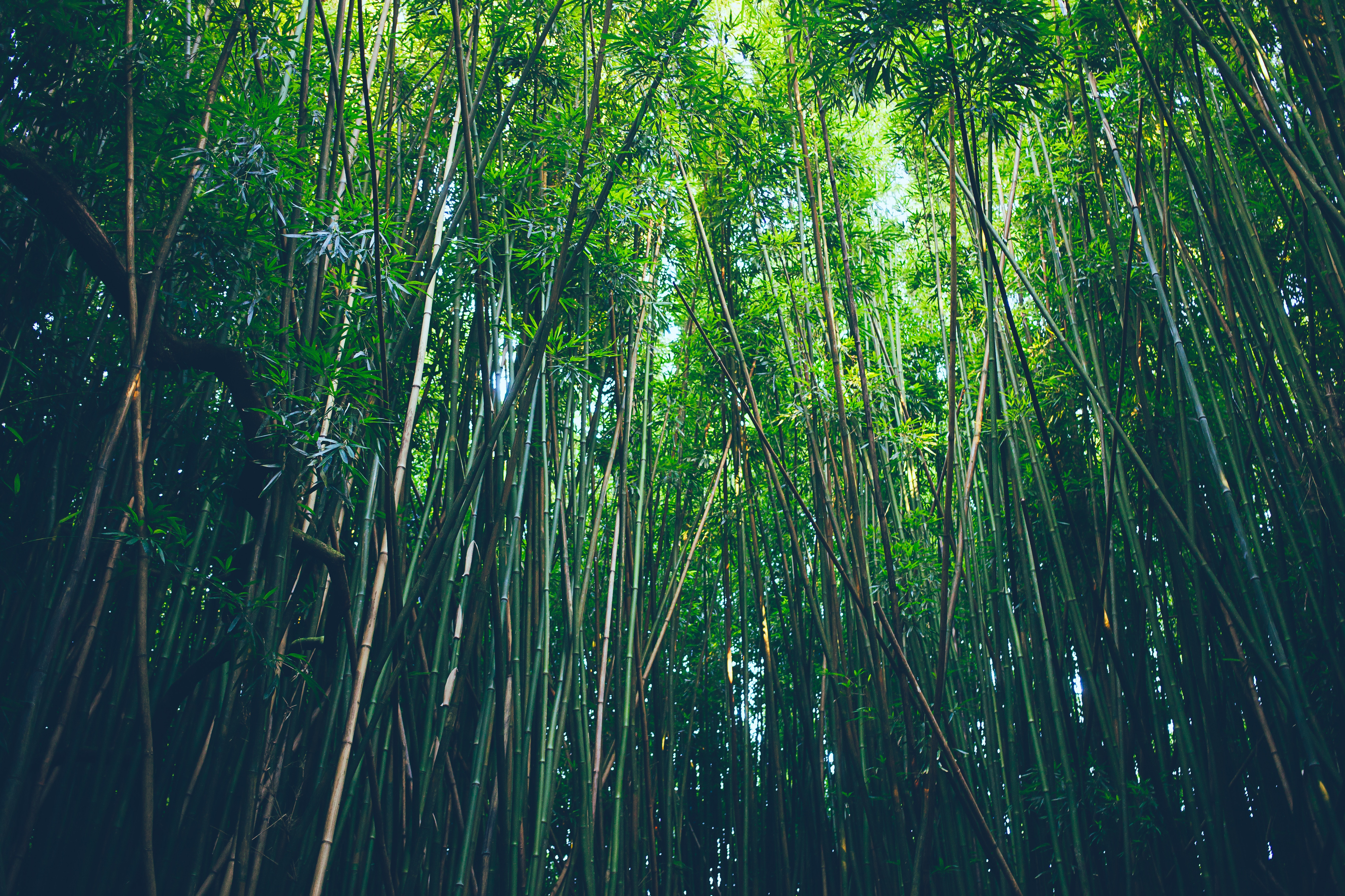 Bamboo Forest Nature 5457x3638
