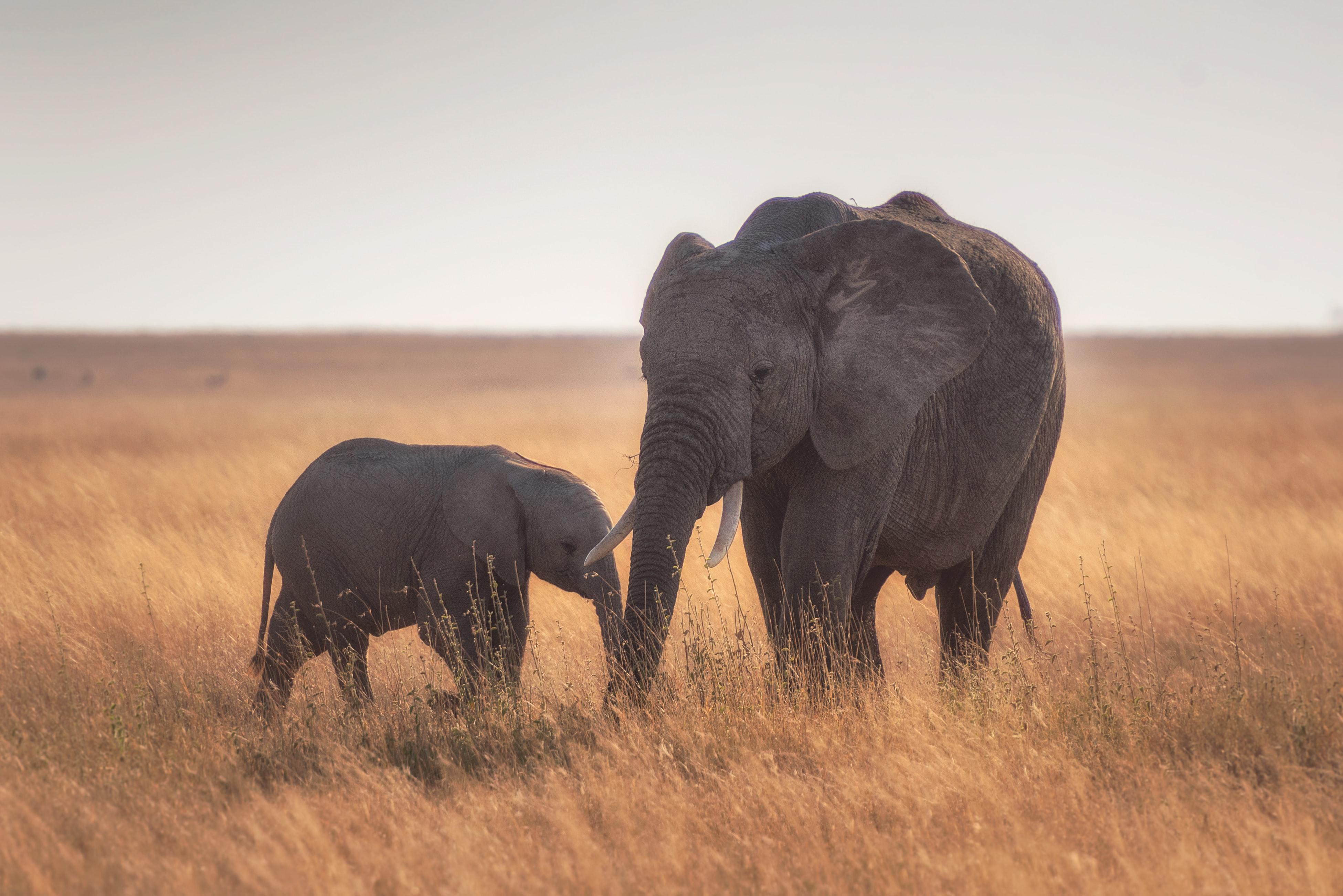 Baby Animal Elephant Wildlife 3902x2605