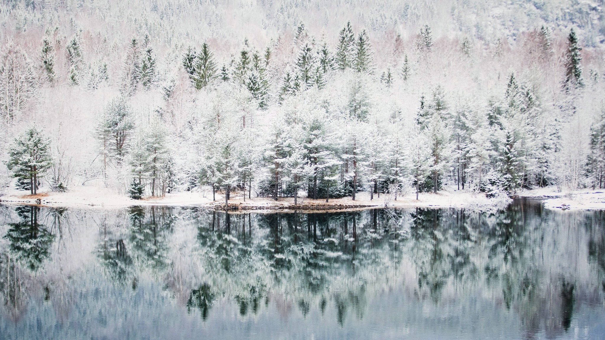 Forest Lake Nature Reflection Winter 2048x1152