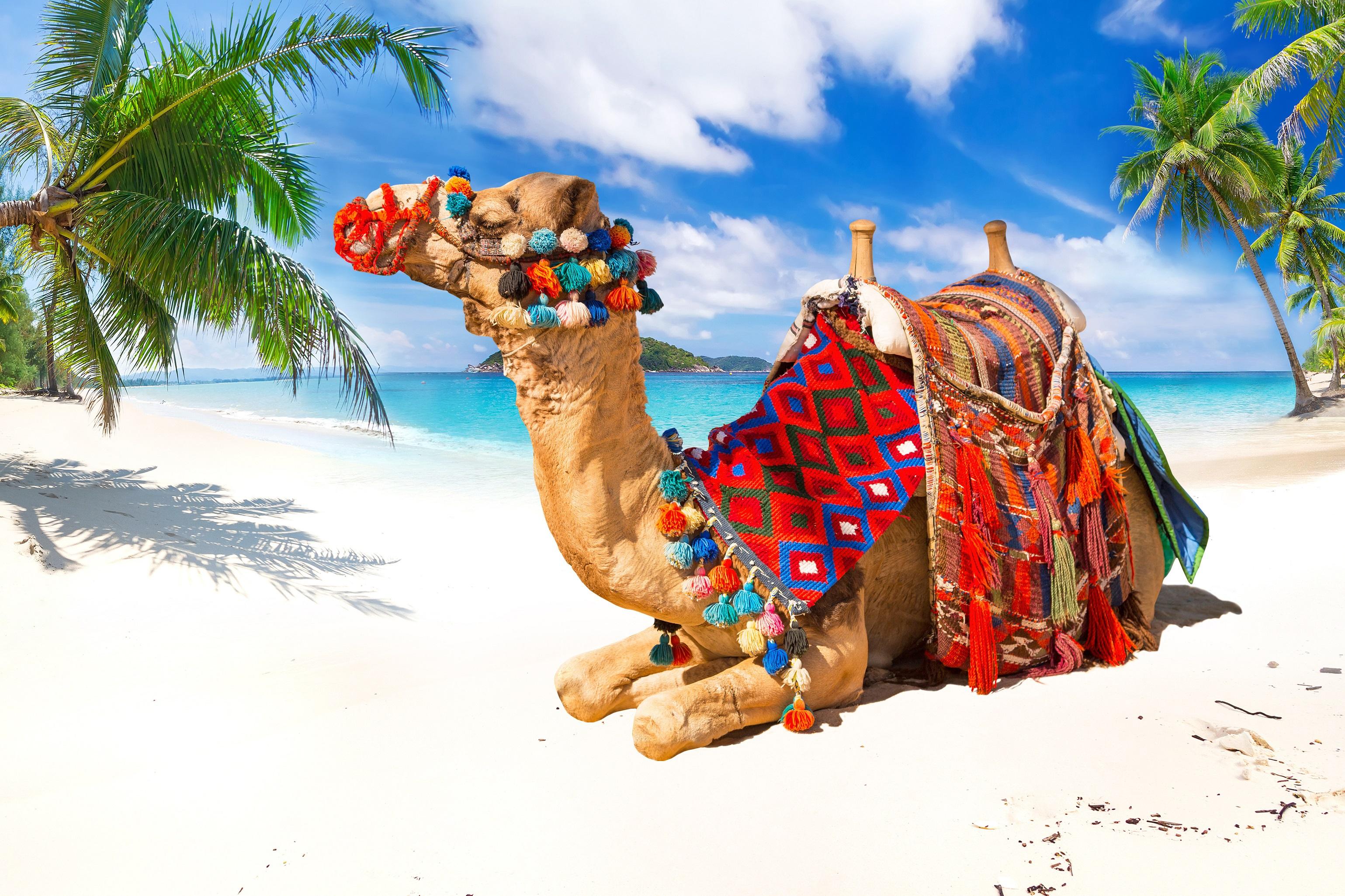 Beach Camel Sand Tropical 3078x2051