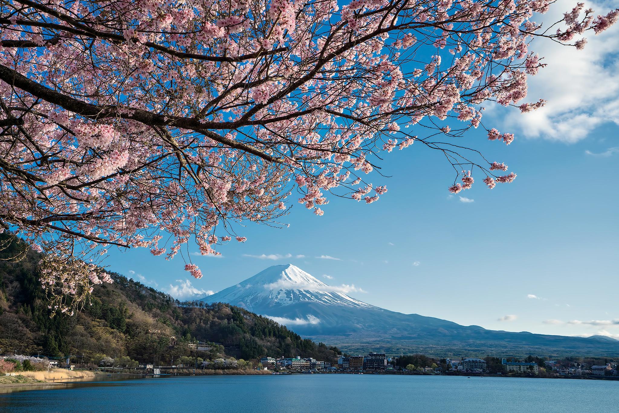 Japan Lake Sakura Spring 2048x1366