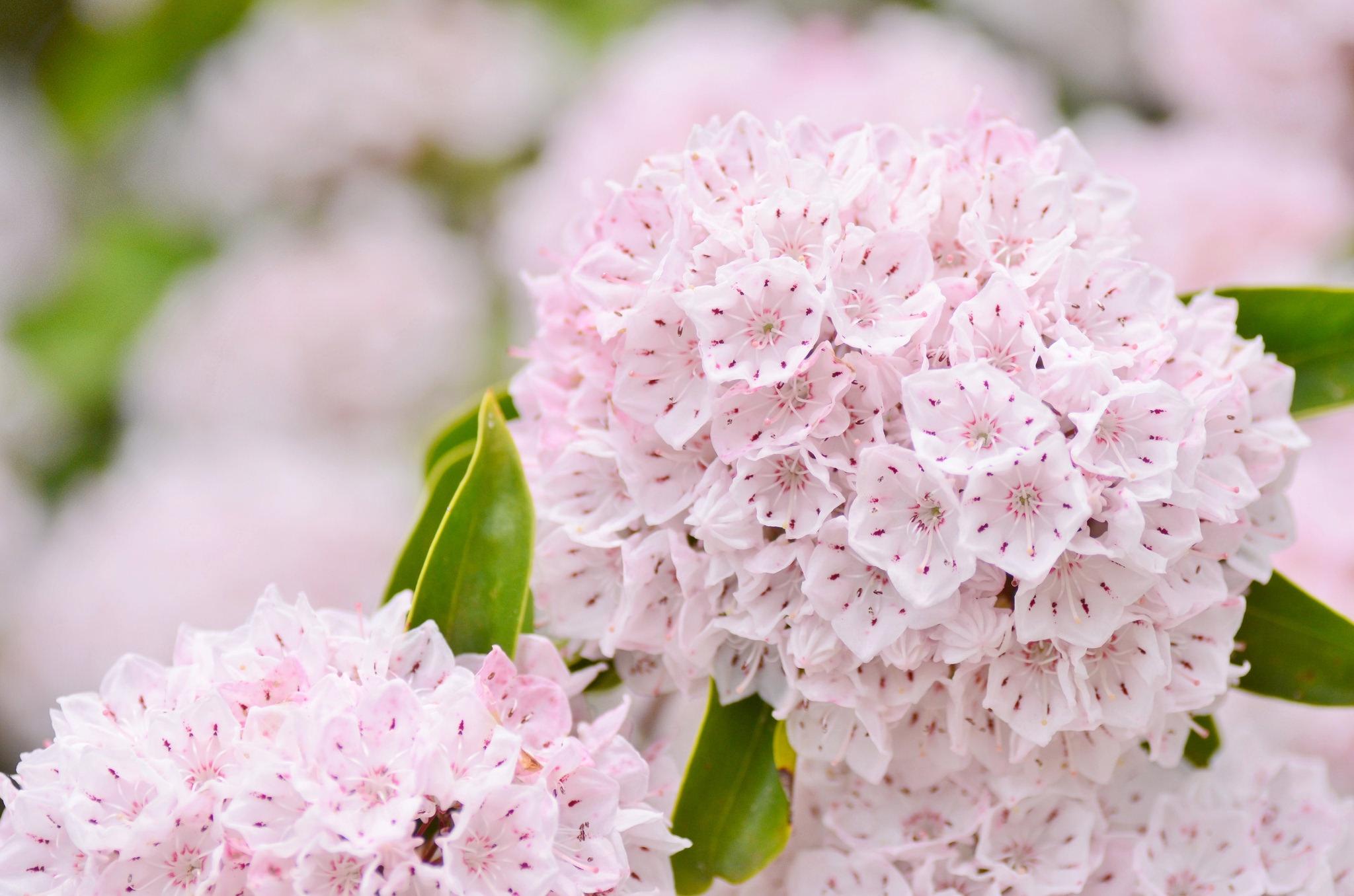 Earth Flower 2048x1356