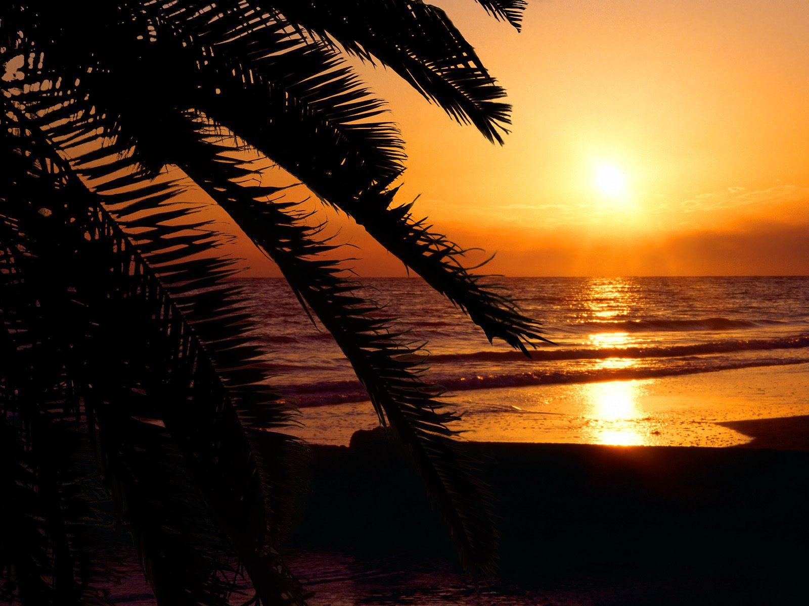 Beach Nature Palm Tree Reflection Sea Sunset 1600x1200