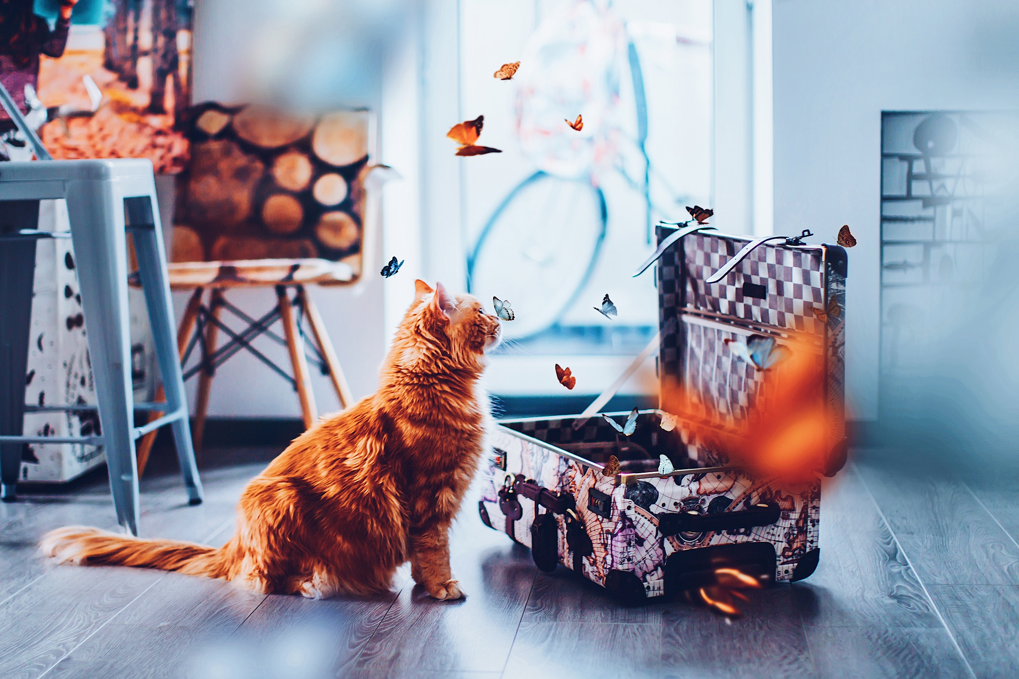 Butterfly Cat Pet Suitcase 2000x1333