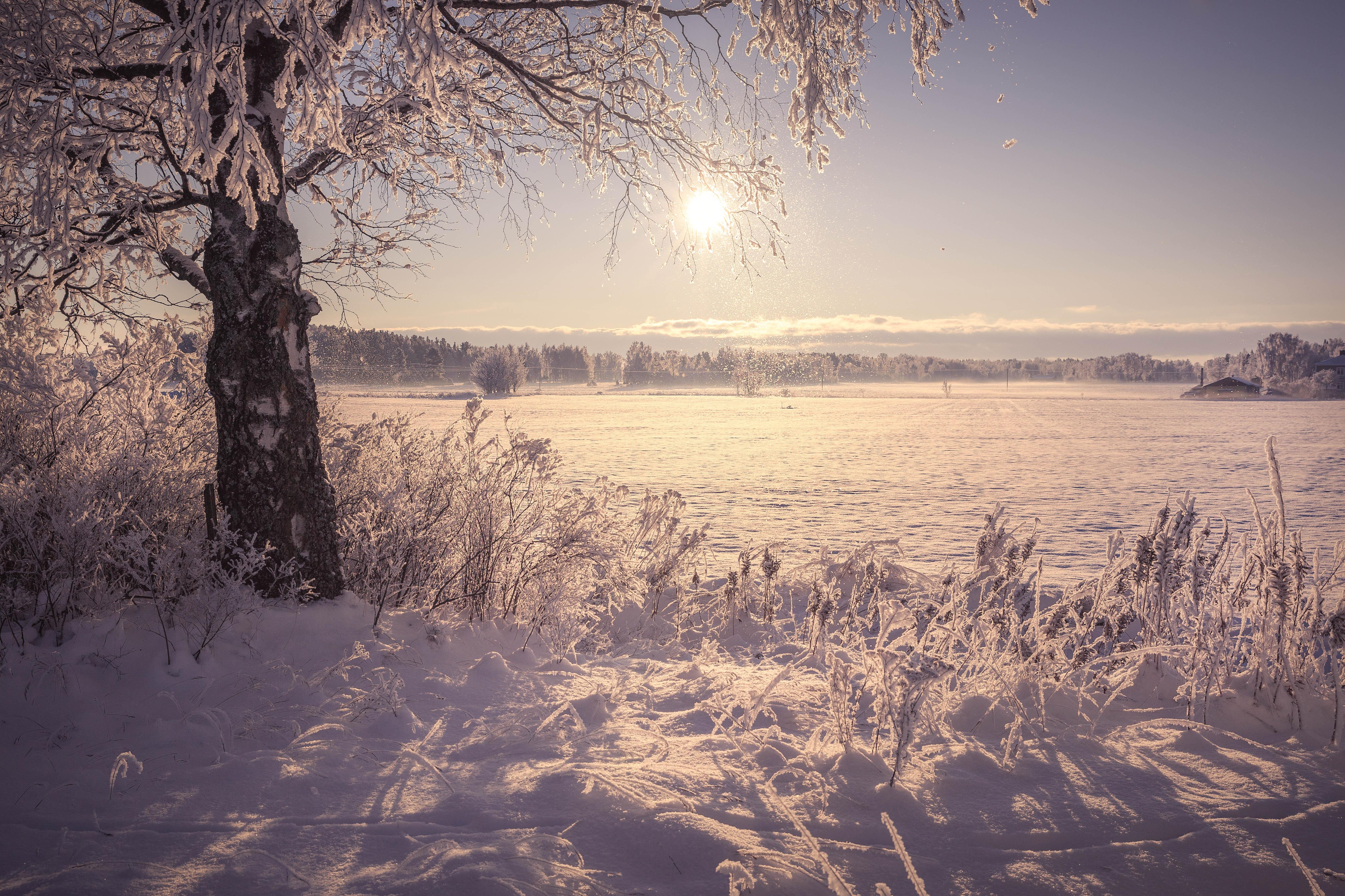 Snow Tree Winter 5622x3748