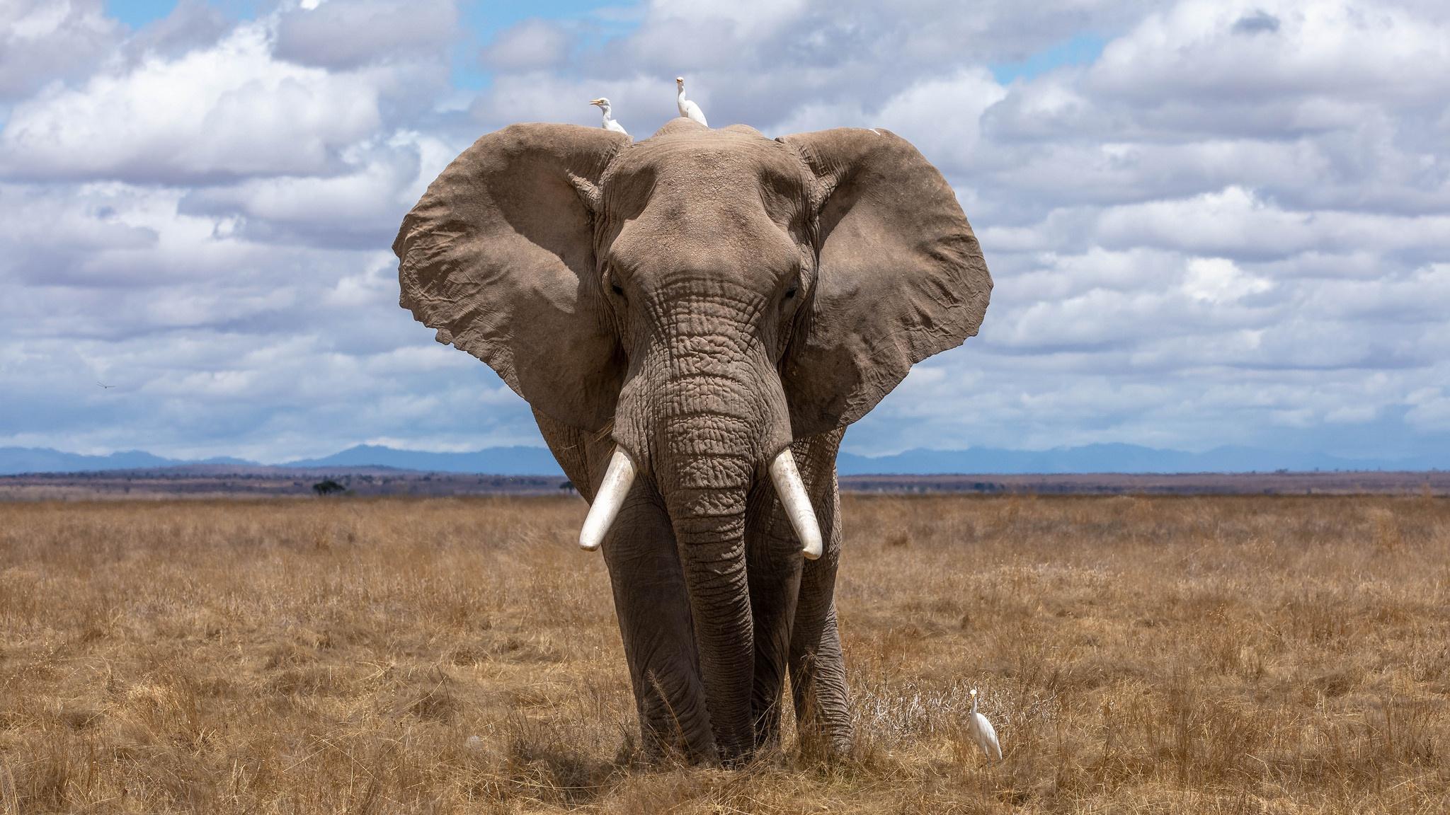 Elephant Wildlife 2048x1152