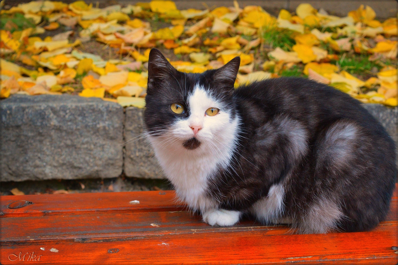 Cat Pet 3000x1995