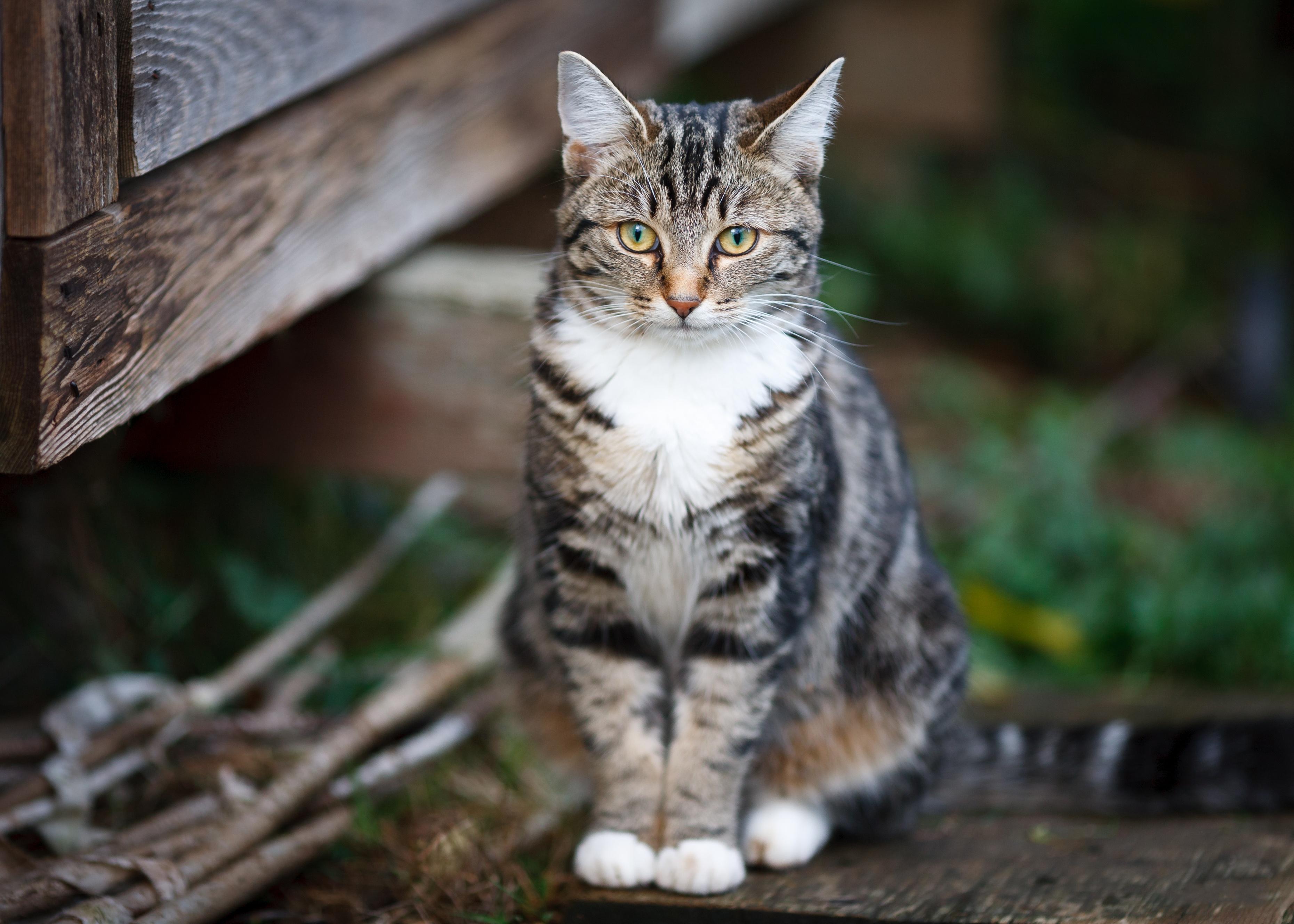 Cat Pet 3721x2658