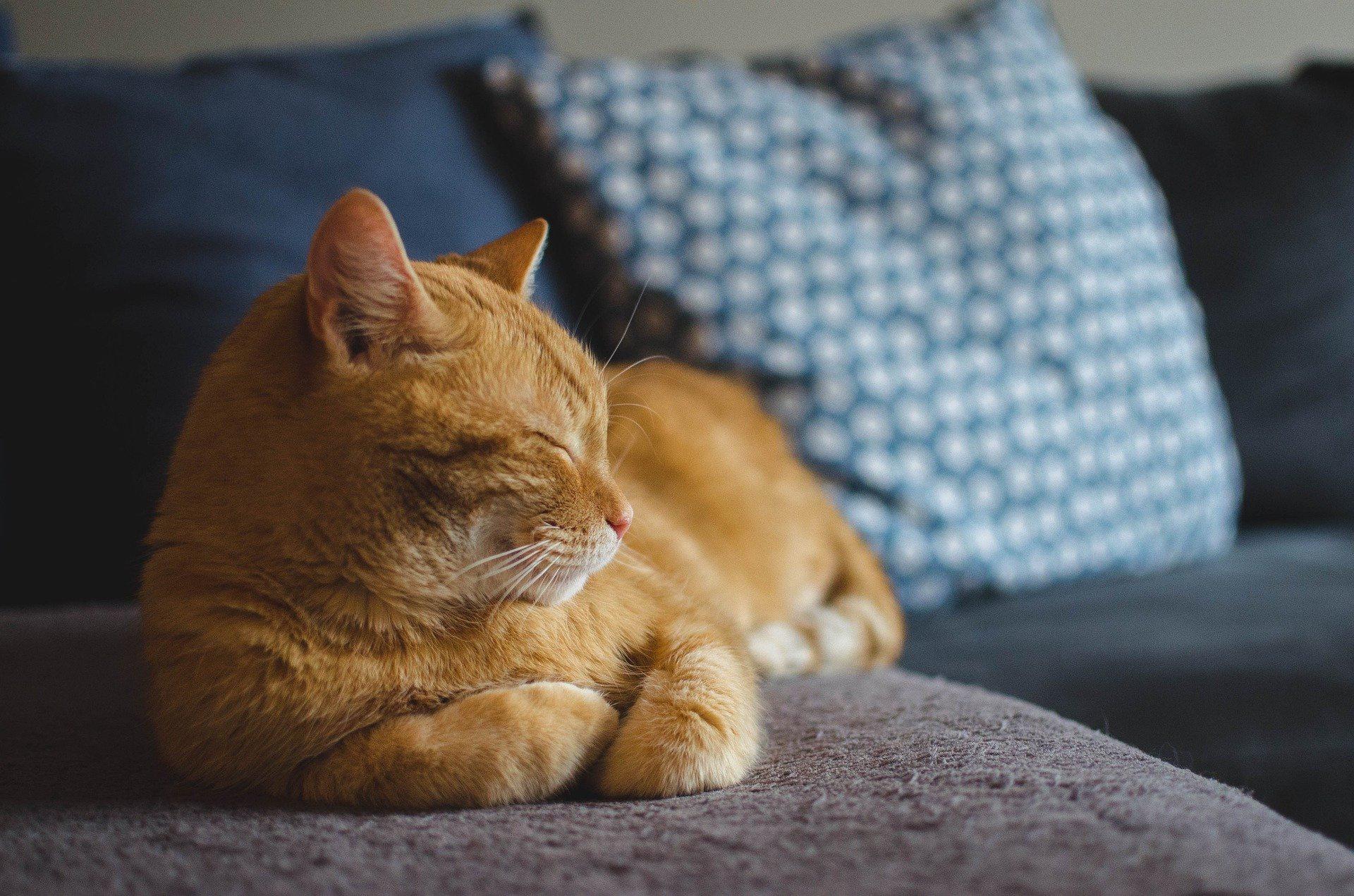 Cat Pet Sleeping 1920x1271