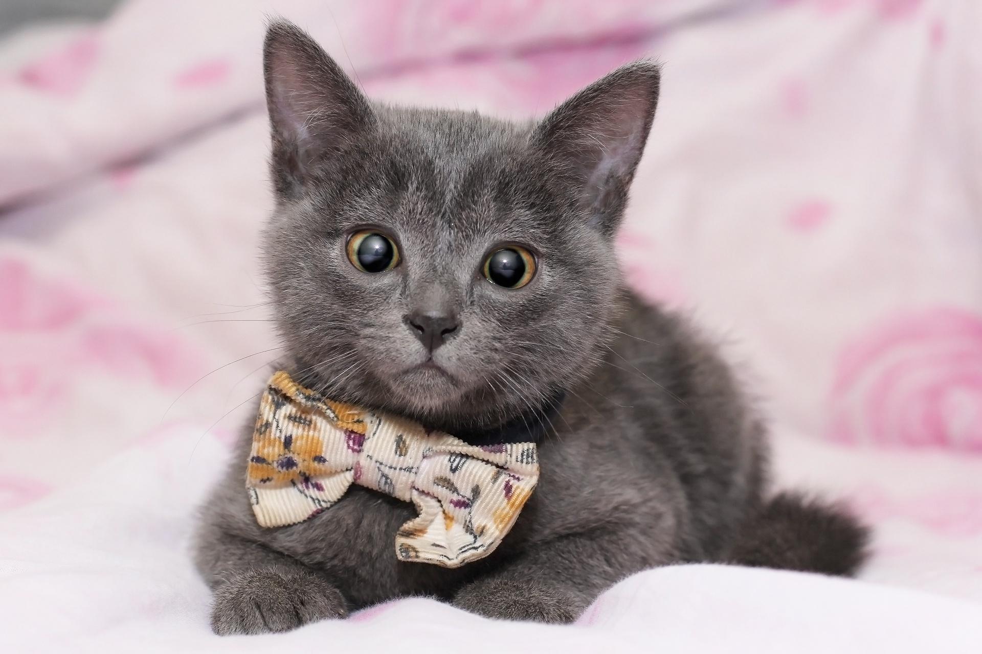 Baby Animal Cat Kitten Pet Stare 1920x1280