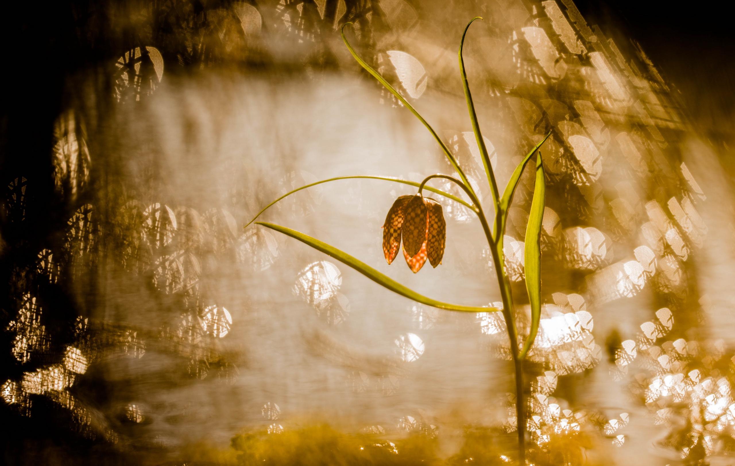 Bokeh Close Up Flower Nature 2560x1623