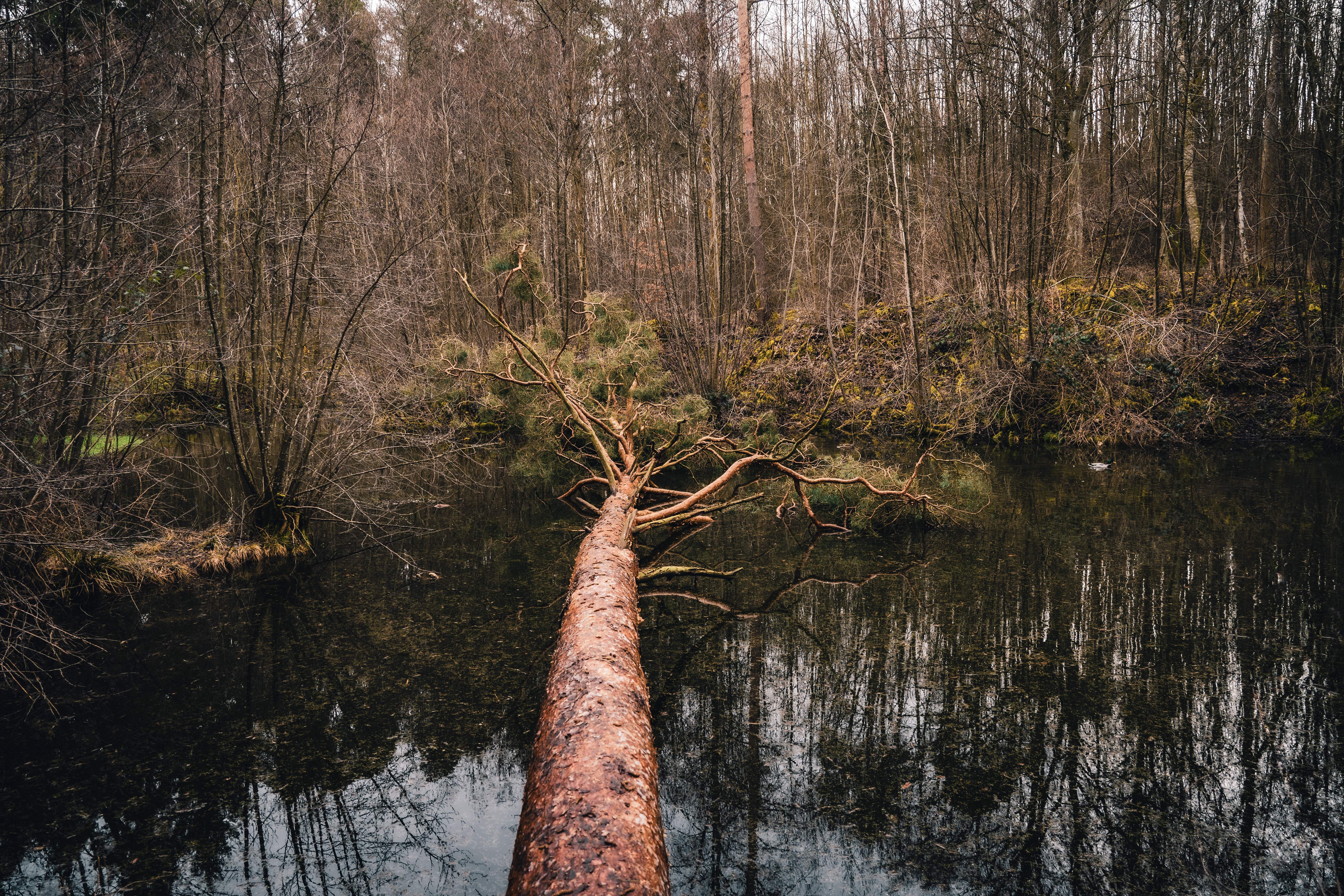 Forest Nature Reflection Tree Water 6000x4000