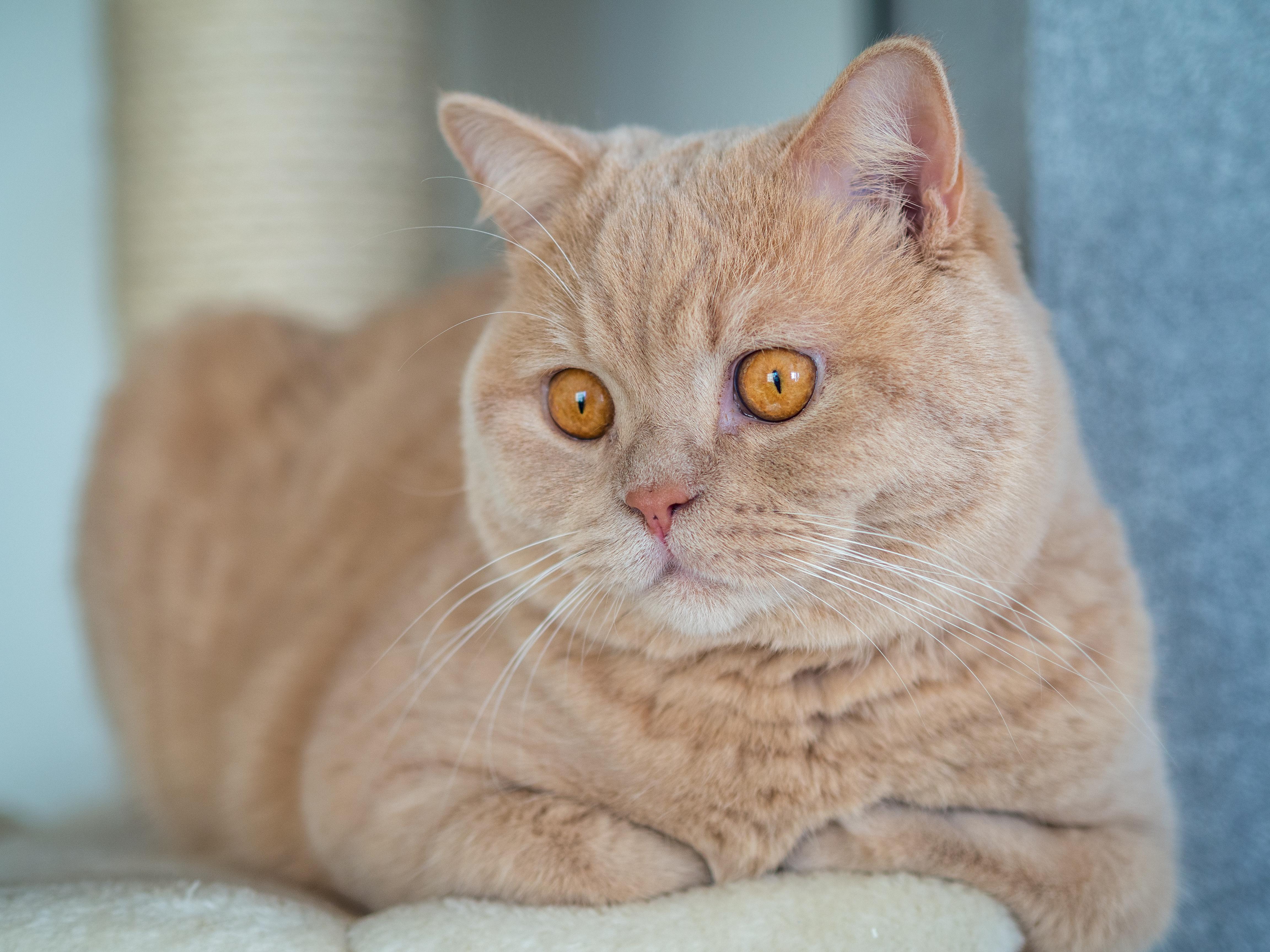 Cat Pet 4608x3456