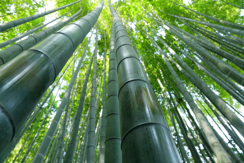Bamboo Greenery Nature 5760x3840