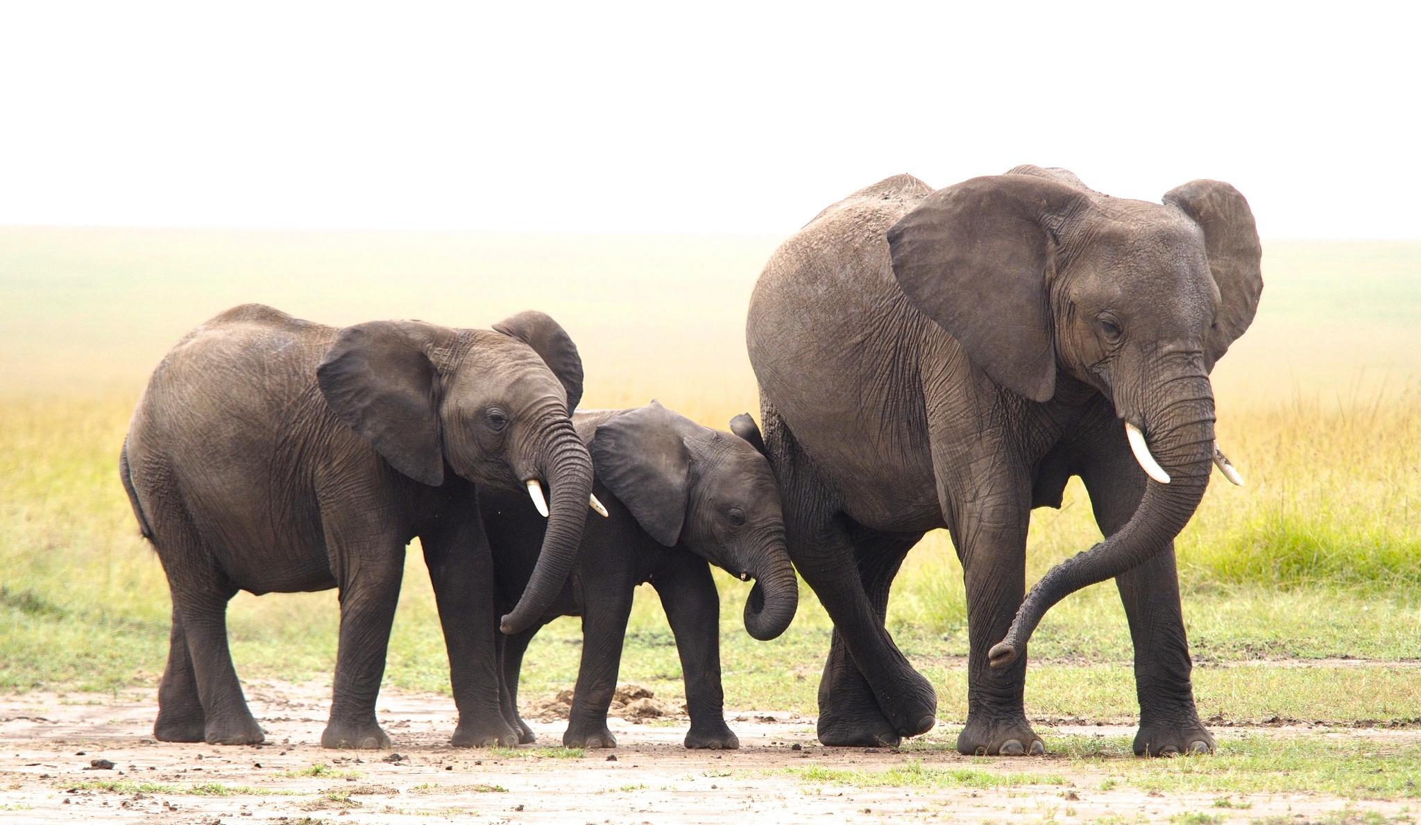 Baby Animal Elephant Wildlife 2048x1189