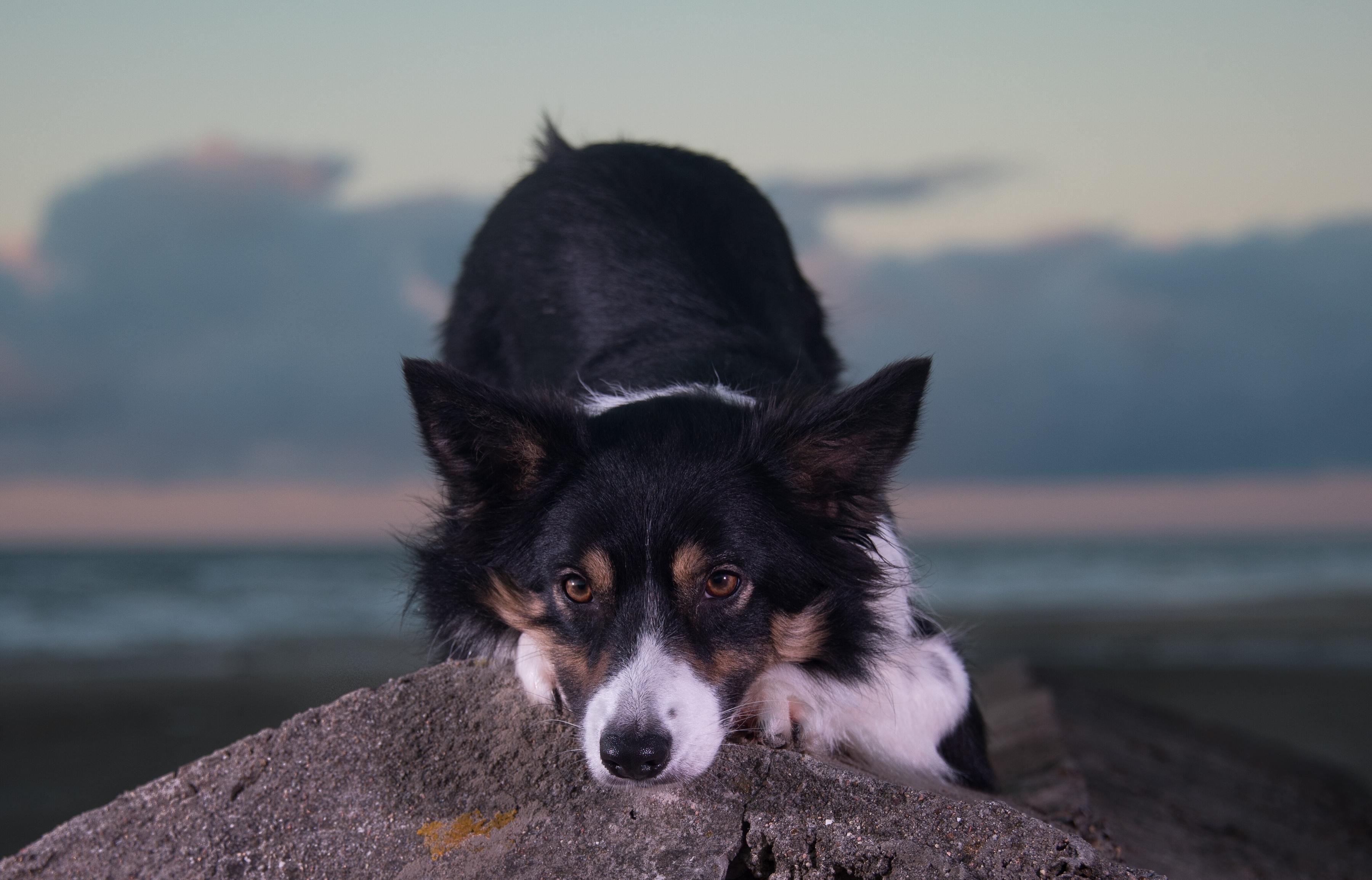 Dog Muzzle Stone 3600x2310