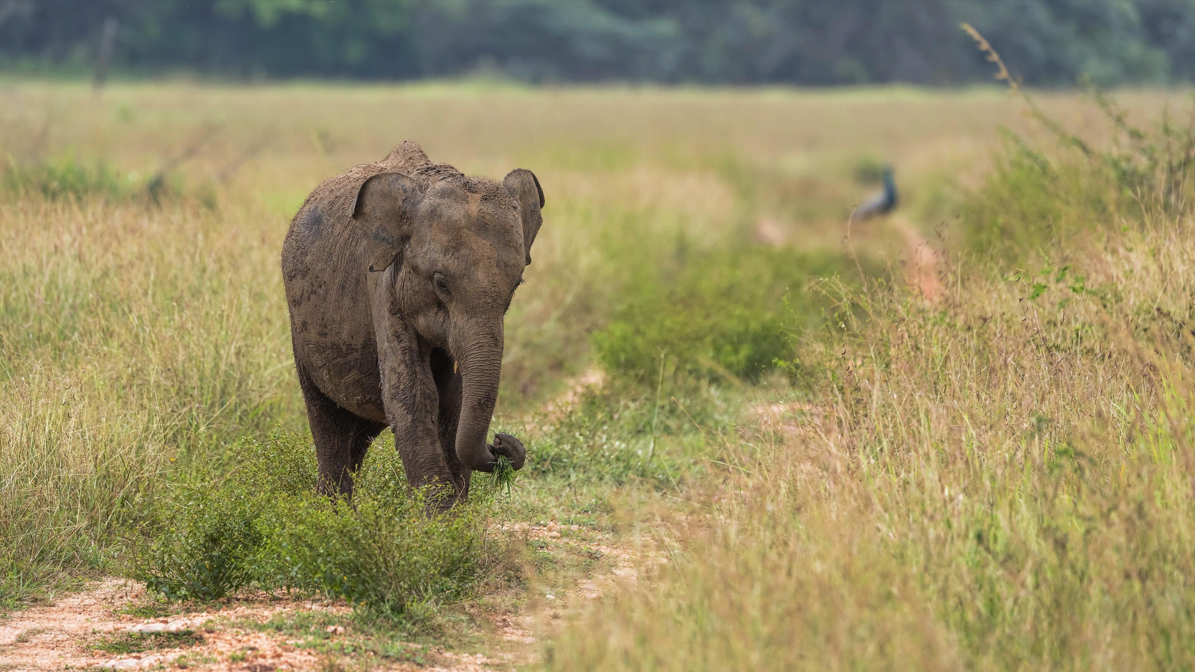 Baby Animal Elephant 3840x2160
