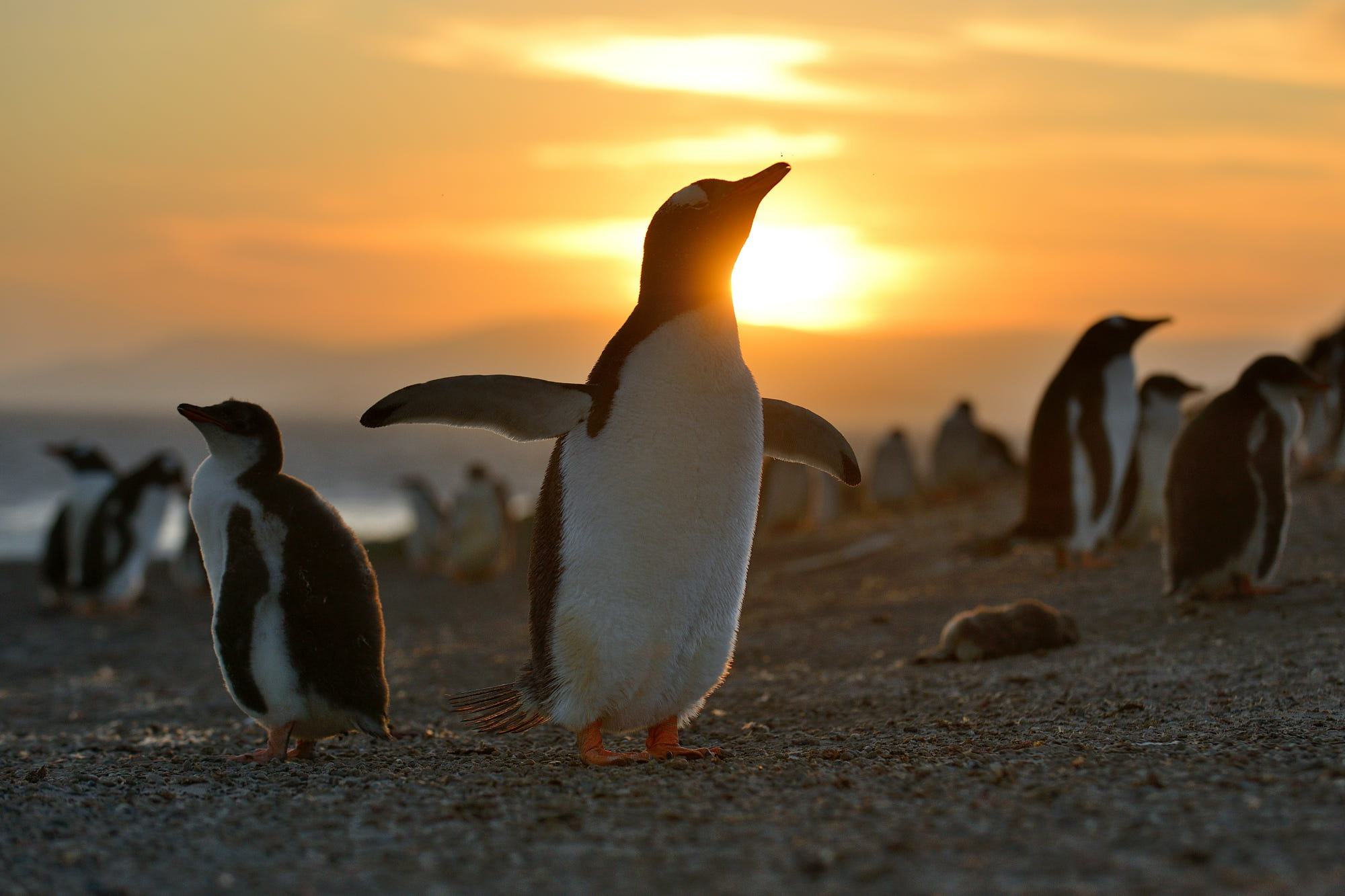Penguin Wildlife 2000x1333