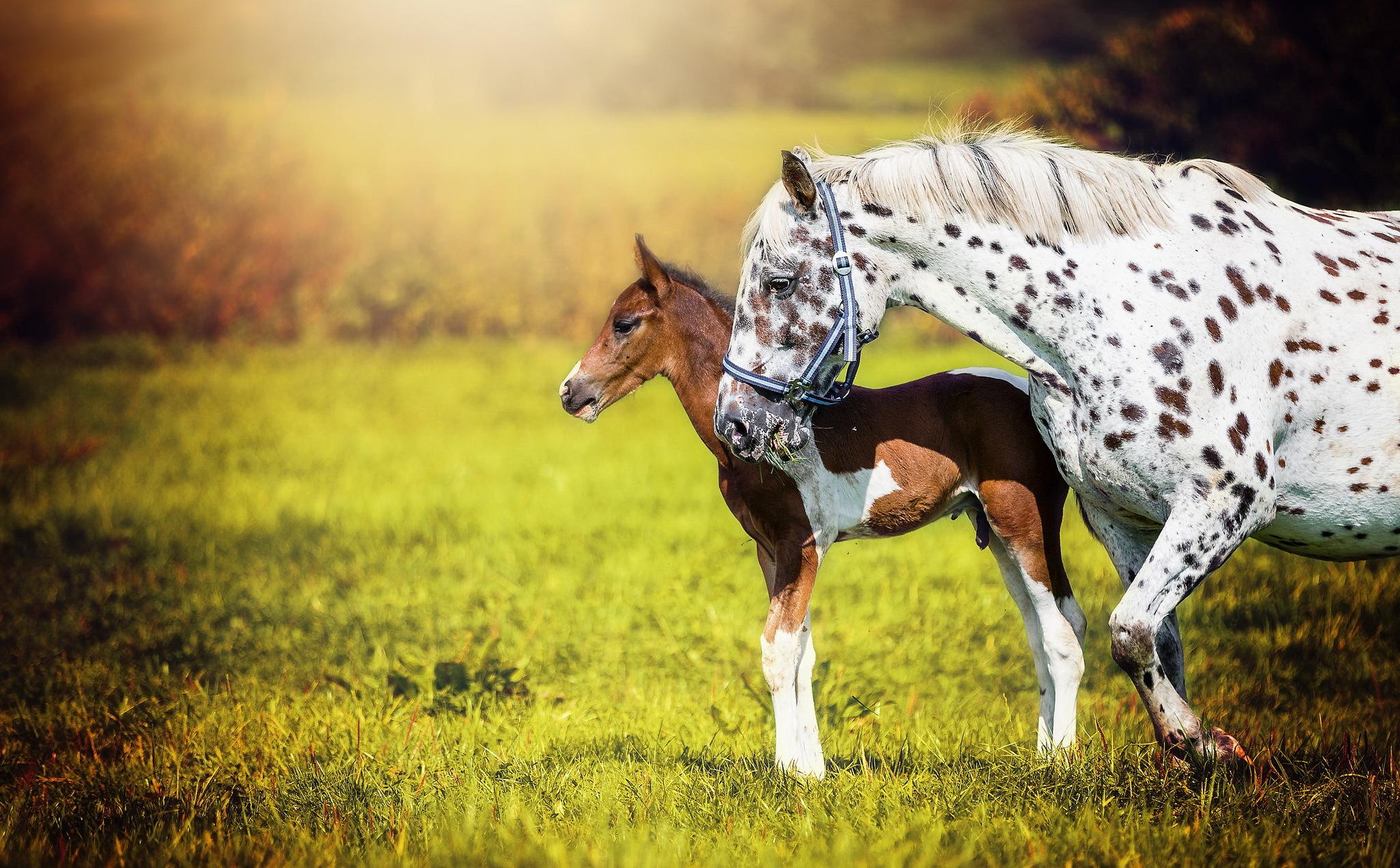 Baby Animal Foal Horse Wildlife 2047x1269