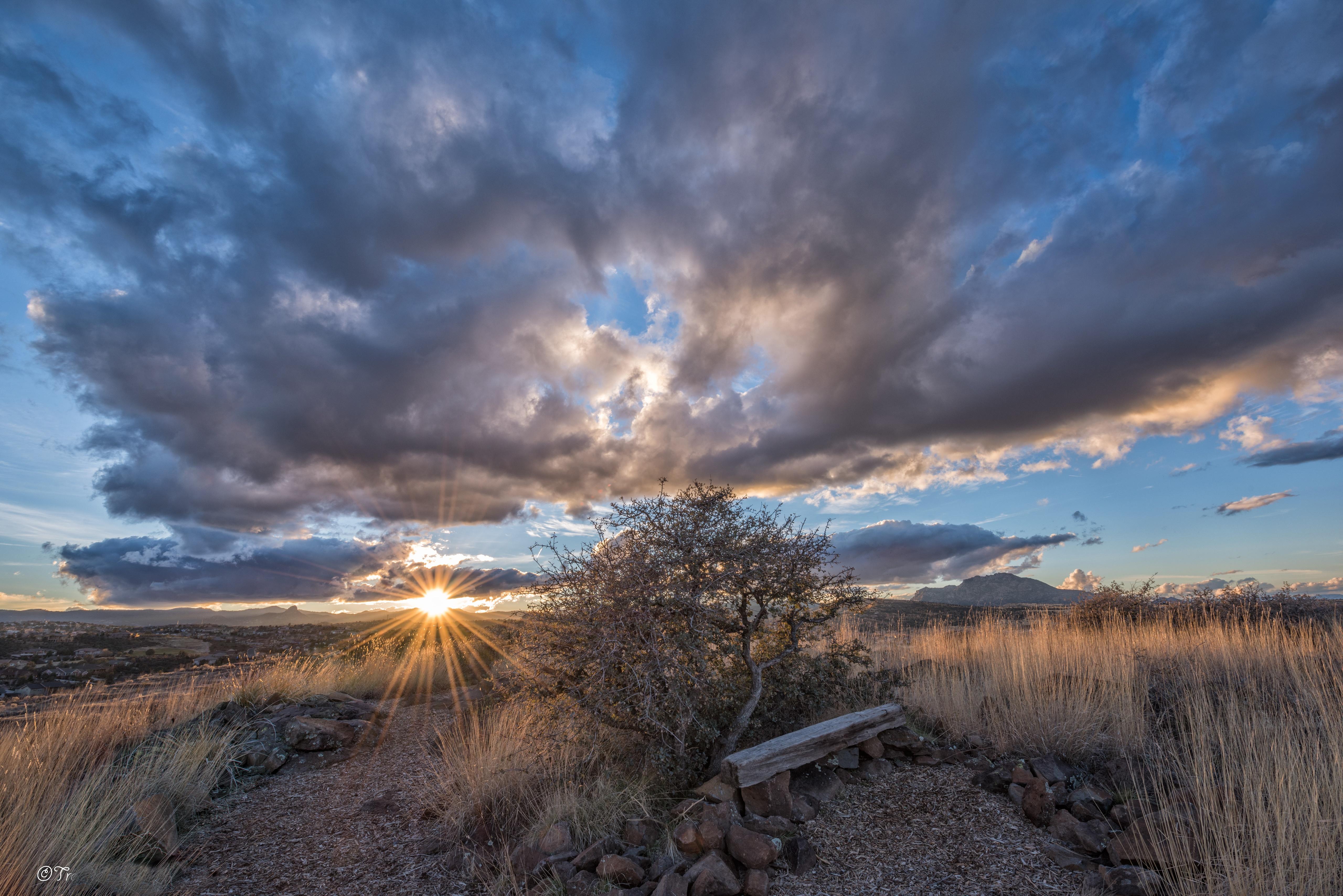 Sunbeam Sunset Tree 5120x3417