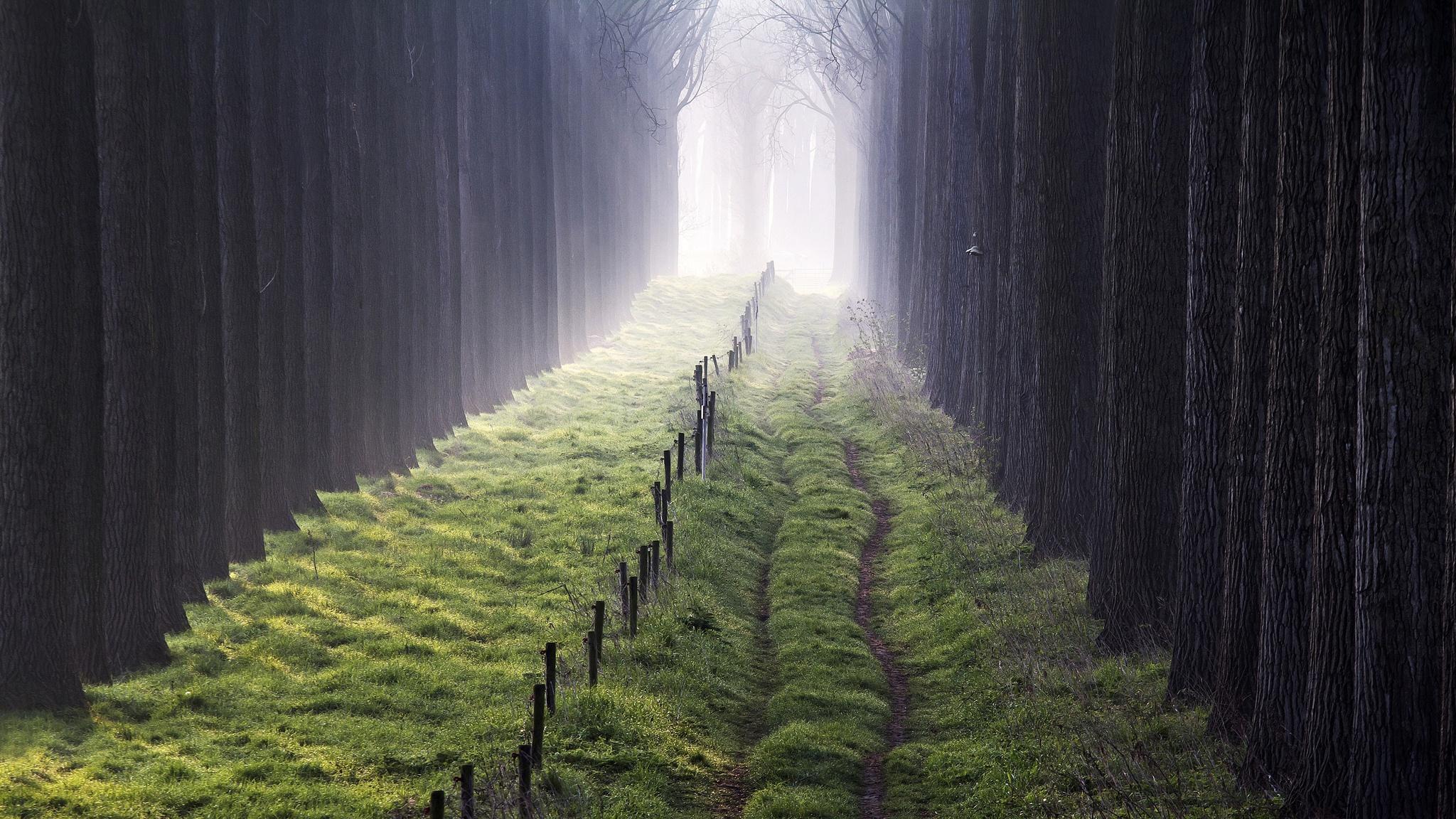Trees Plants Outdoors Grass Mist 2048x1152
