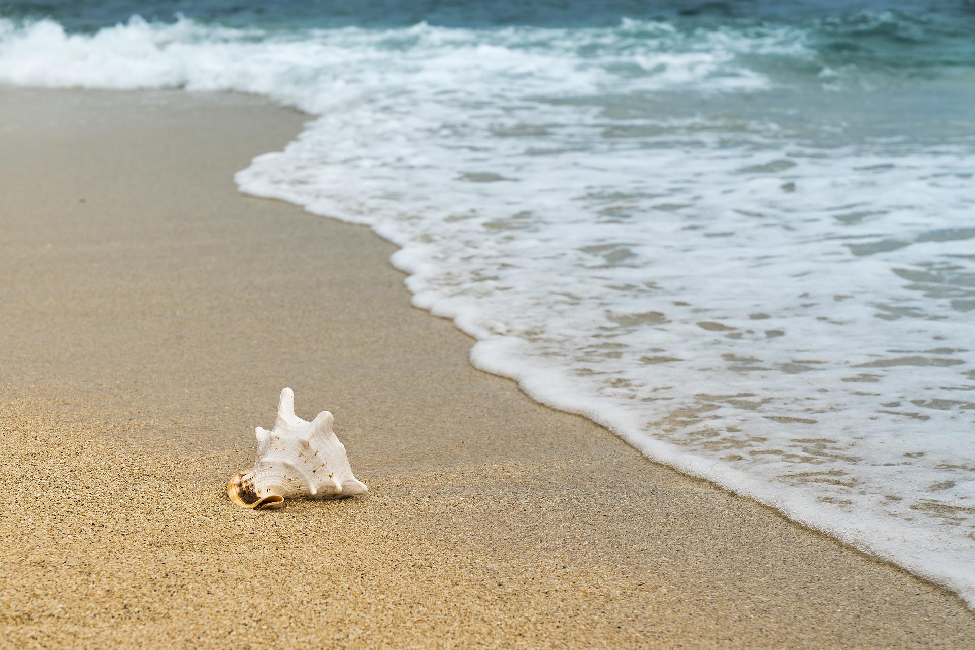 Beach Shell Wildlife 1920x1280