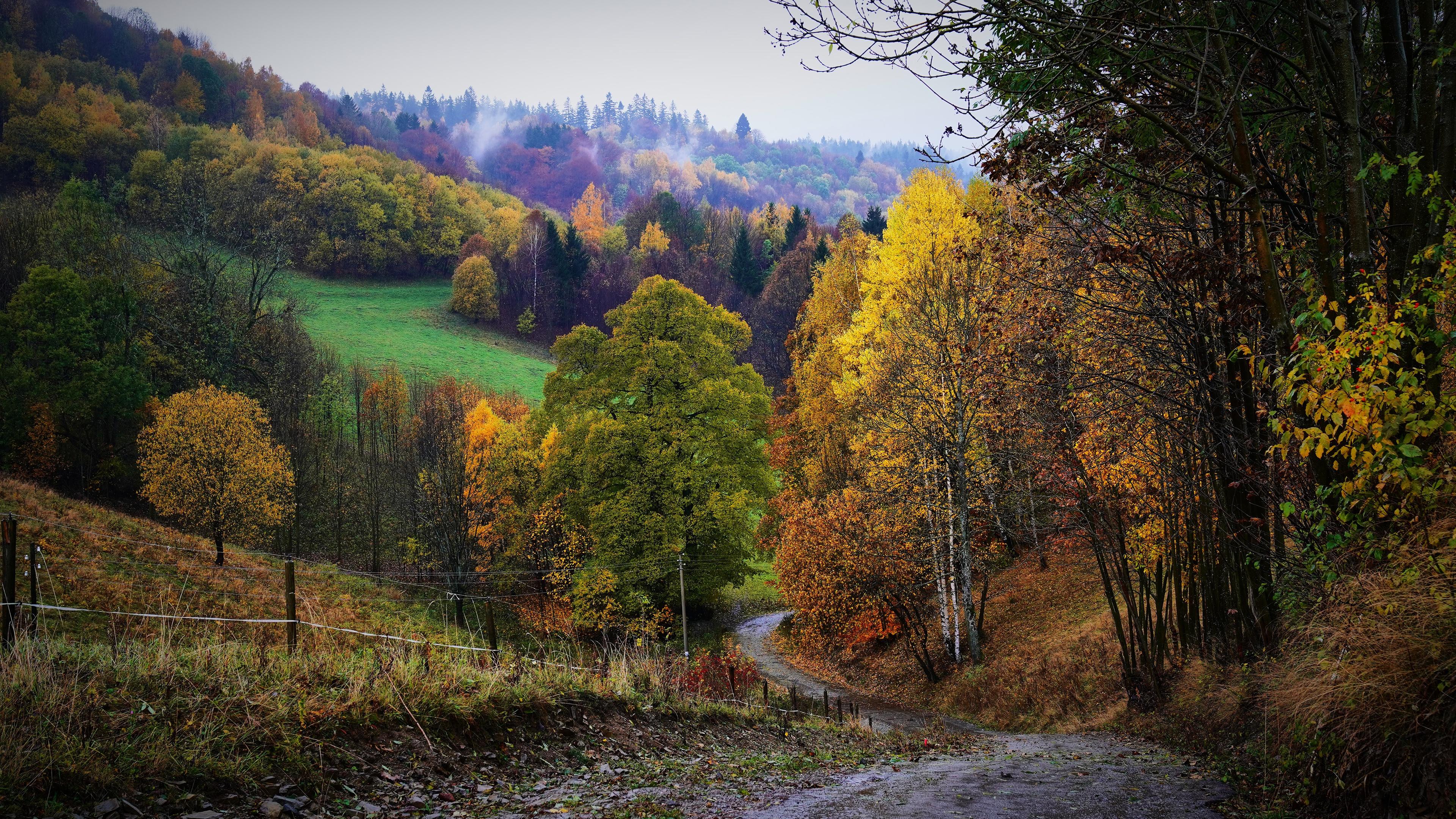 Fall Fence Fog Forest Hill Path 3840x2160