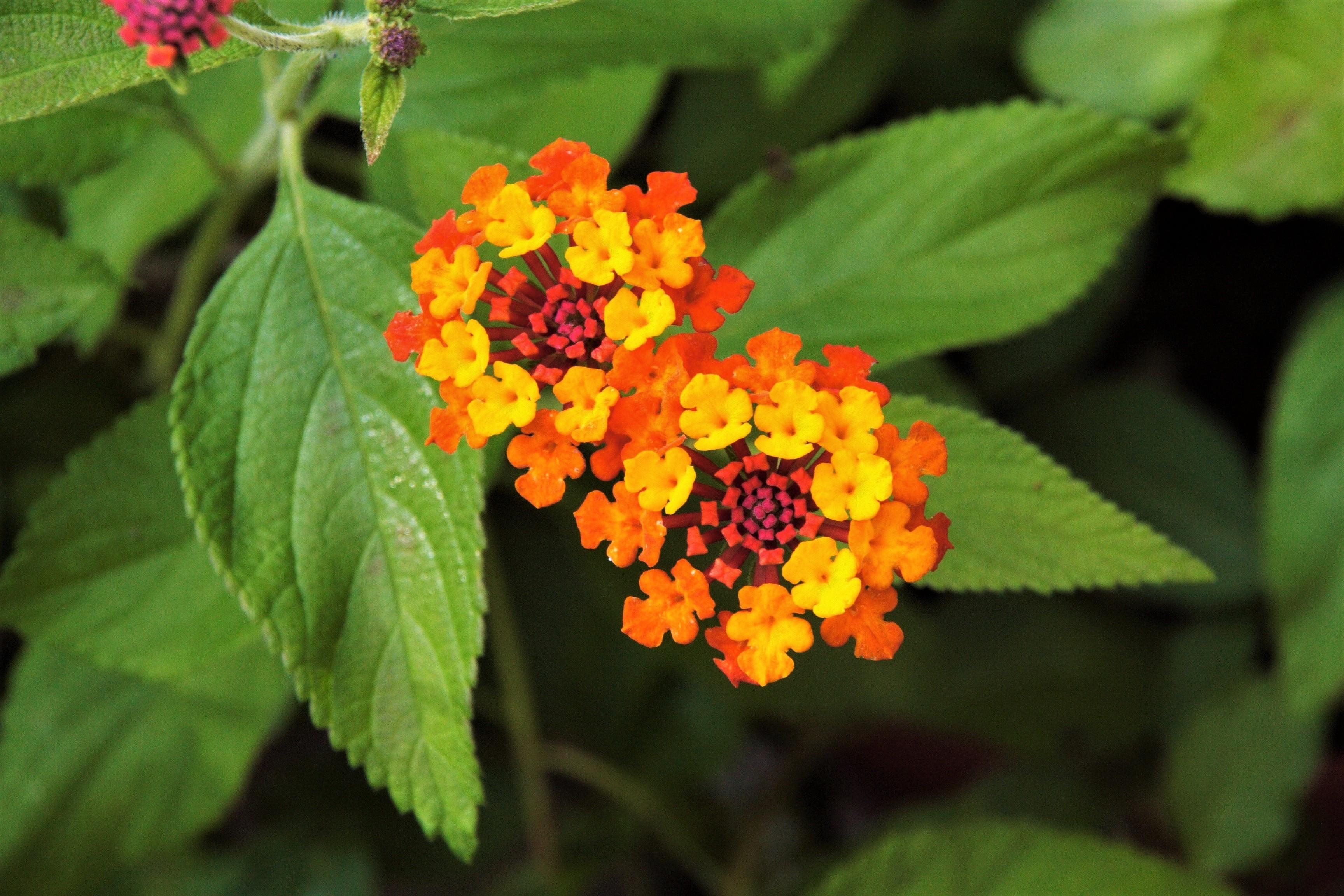 Colorful Colors Earth Flower Leaf Orange Flower 3456x2304