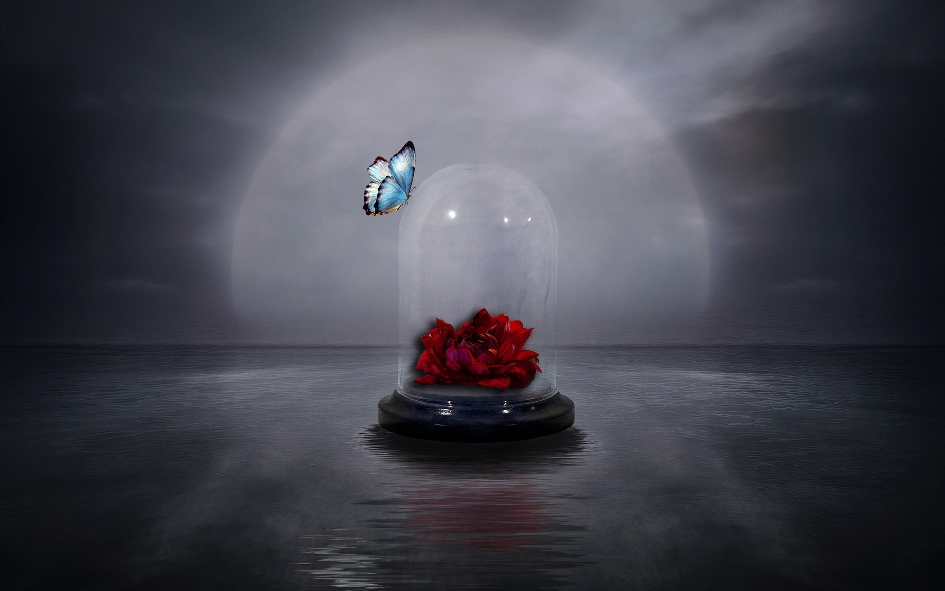 Artistic Butterfly Glass Jar Red Rose Rose 1920x1200