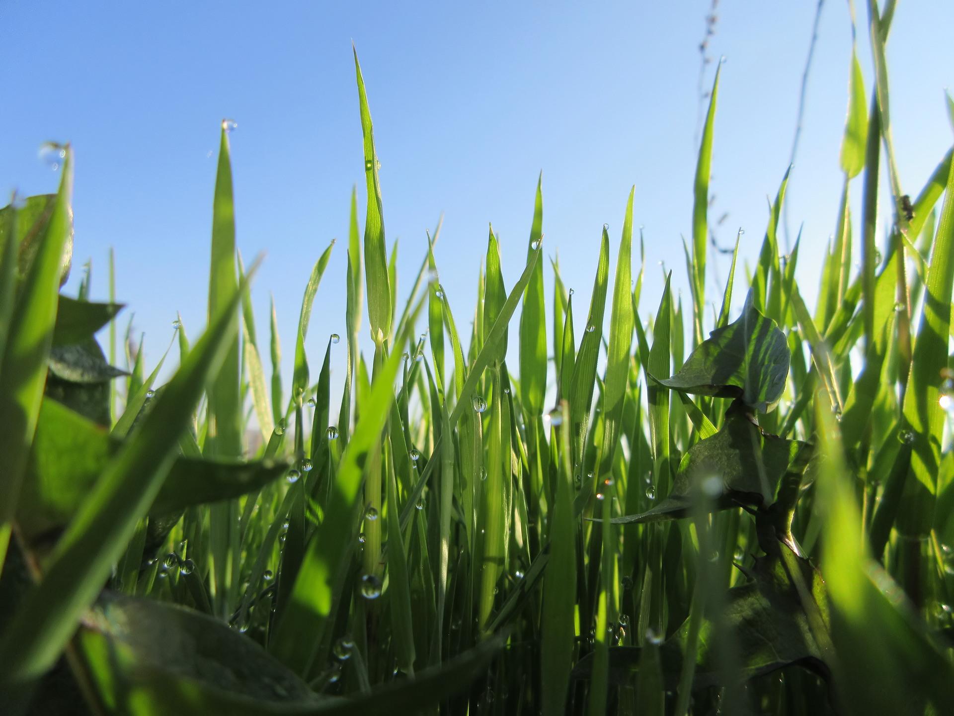 Grass 1920x1440