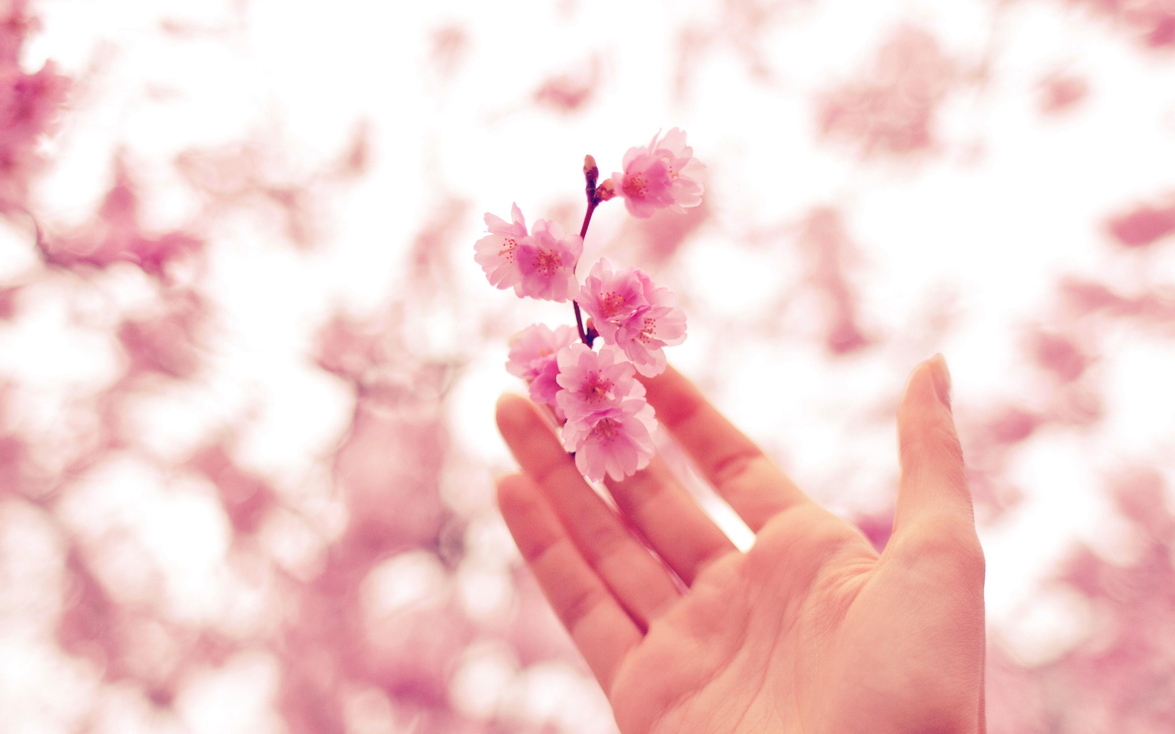 Cherry Blossom Hand 3840x2400