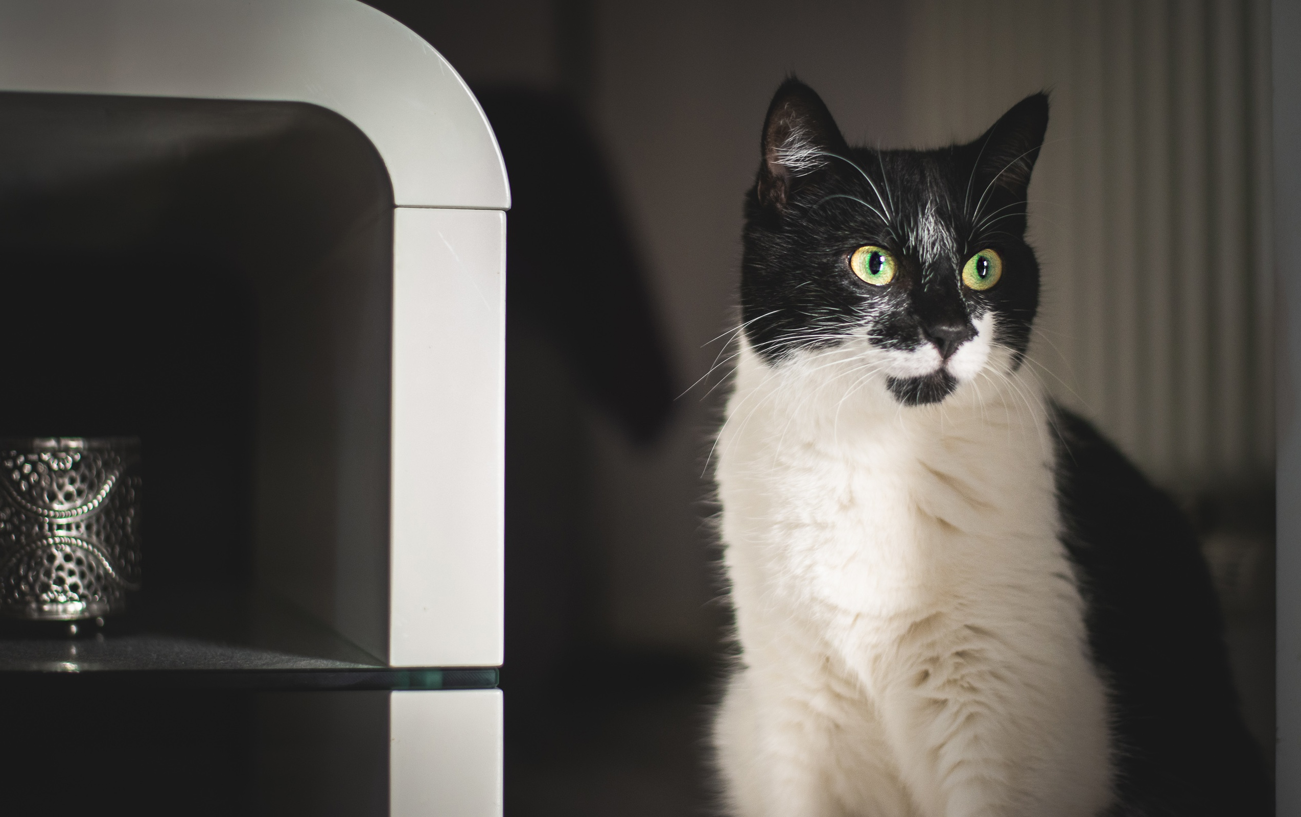 Cat Pet 2546x1600