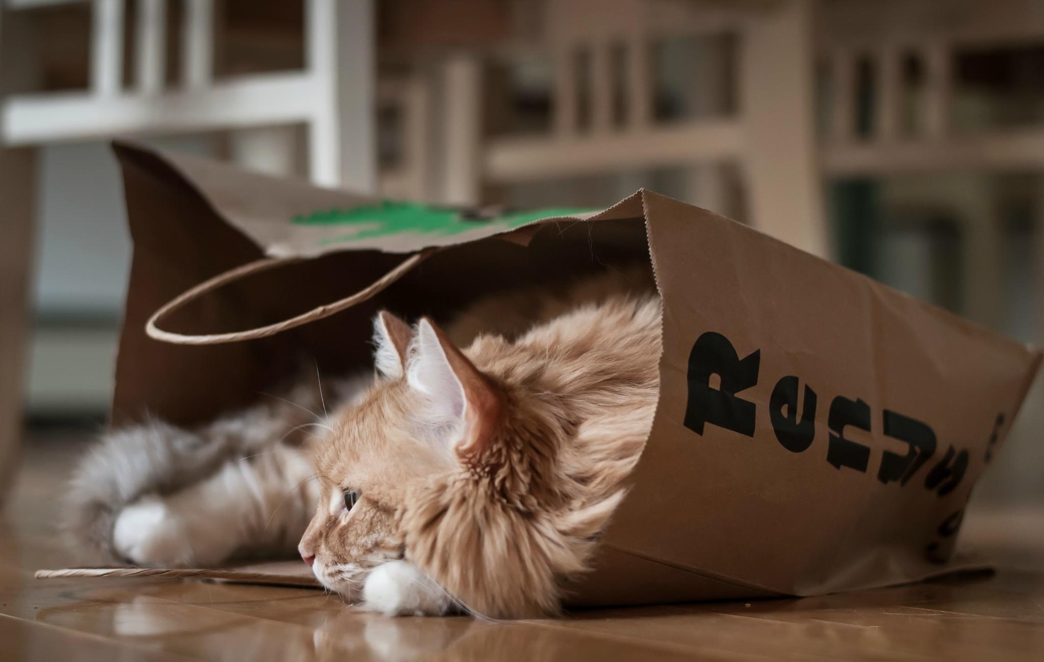 Cat Pet 2048x1300
