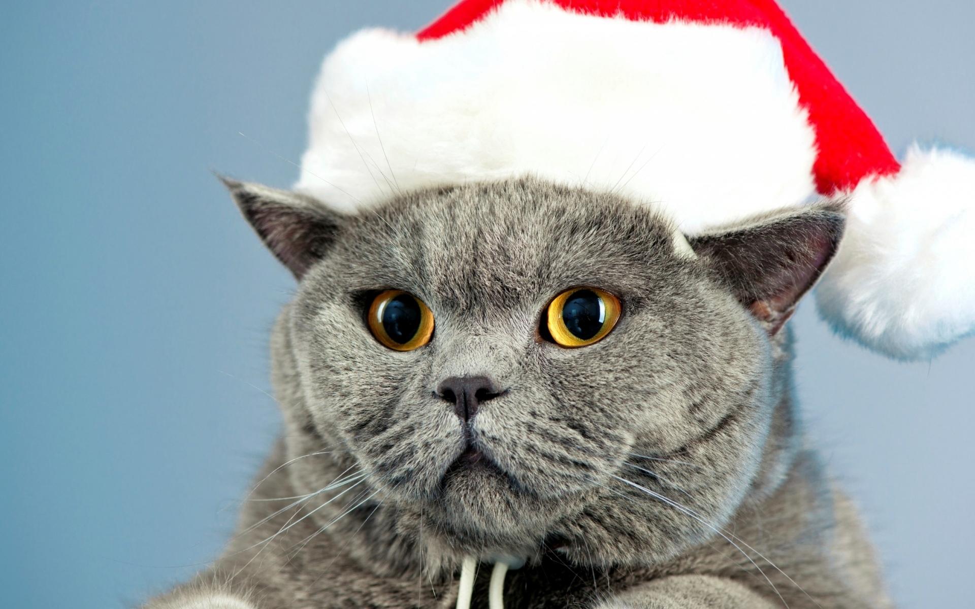 Animal Cat Christmas Pet Santa Hat Yellow Eyes 1920x1200