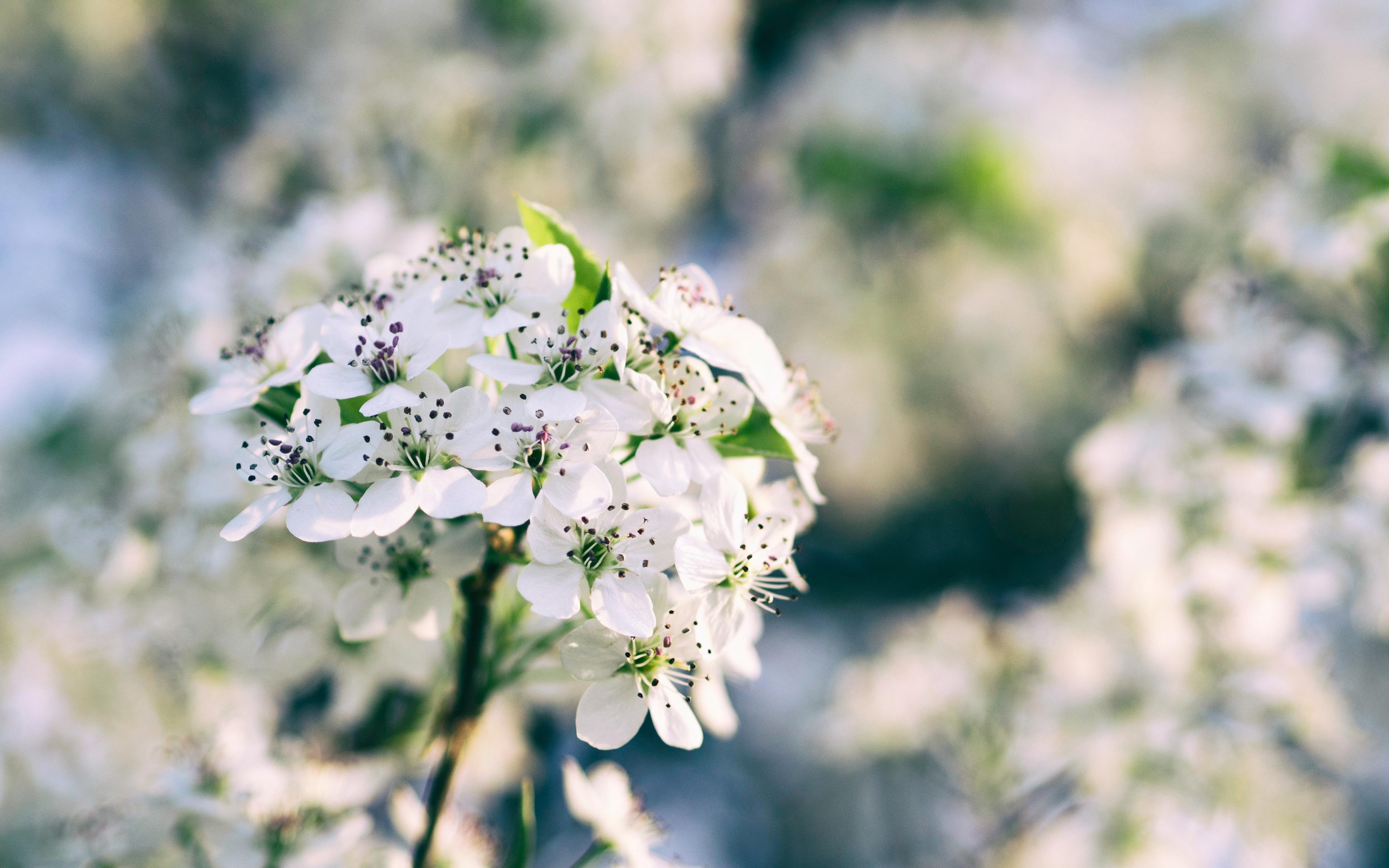 Flower 3840x2400