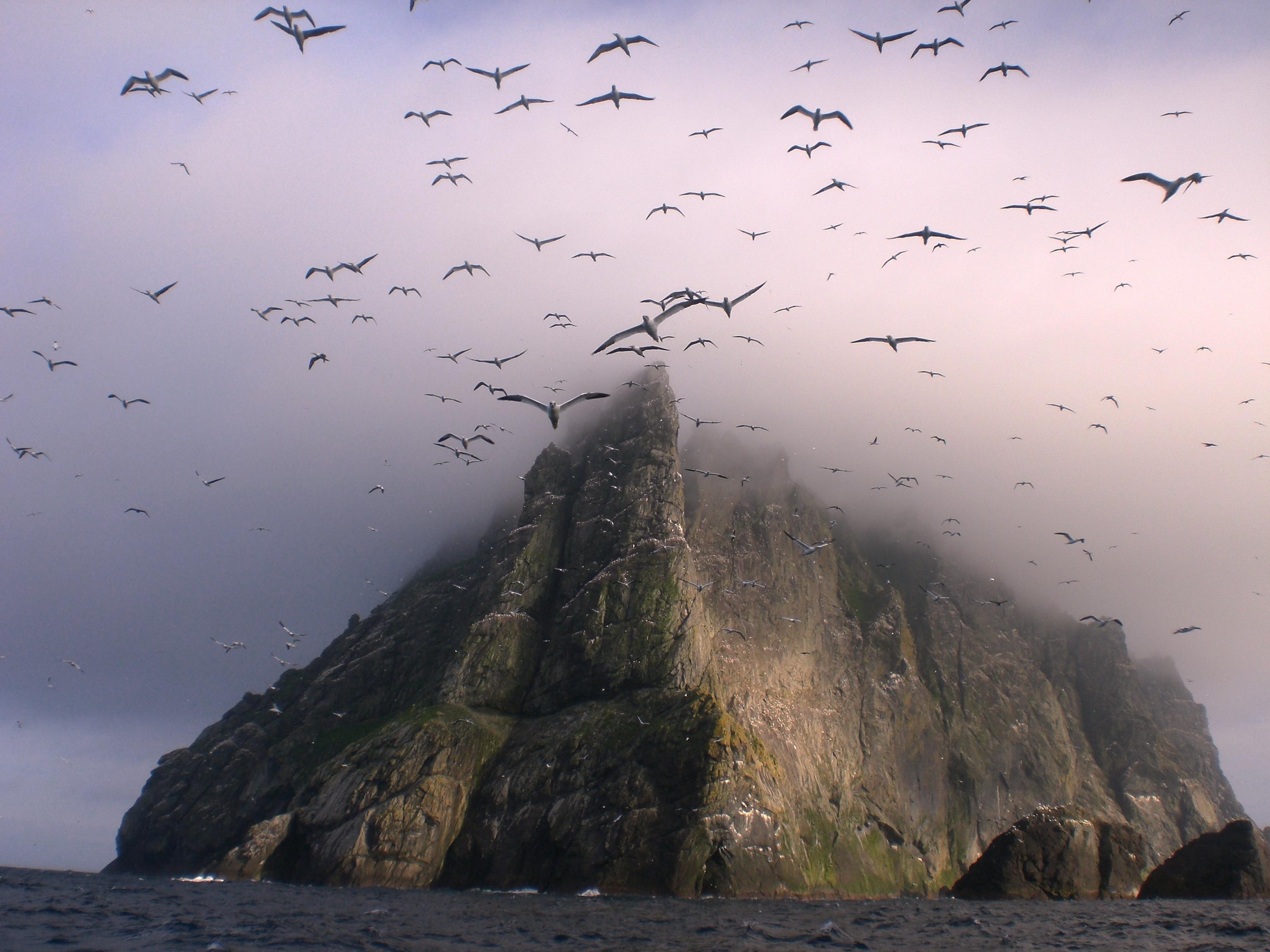 Bird Cliff Flock Of Birds Island Scotland Seagull 3072x2304