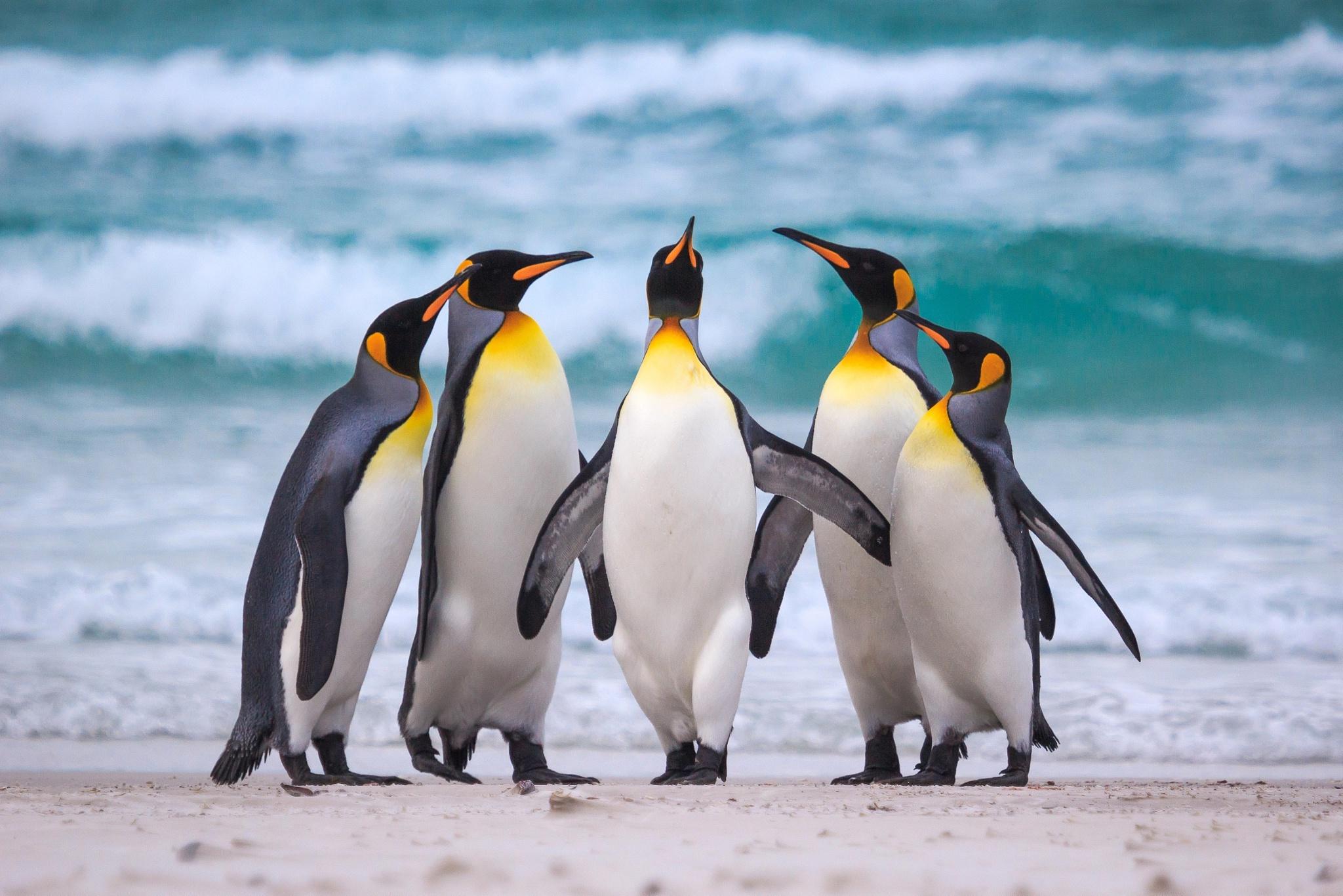 Penguin Wildlife 2048x1366